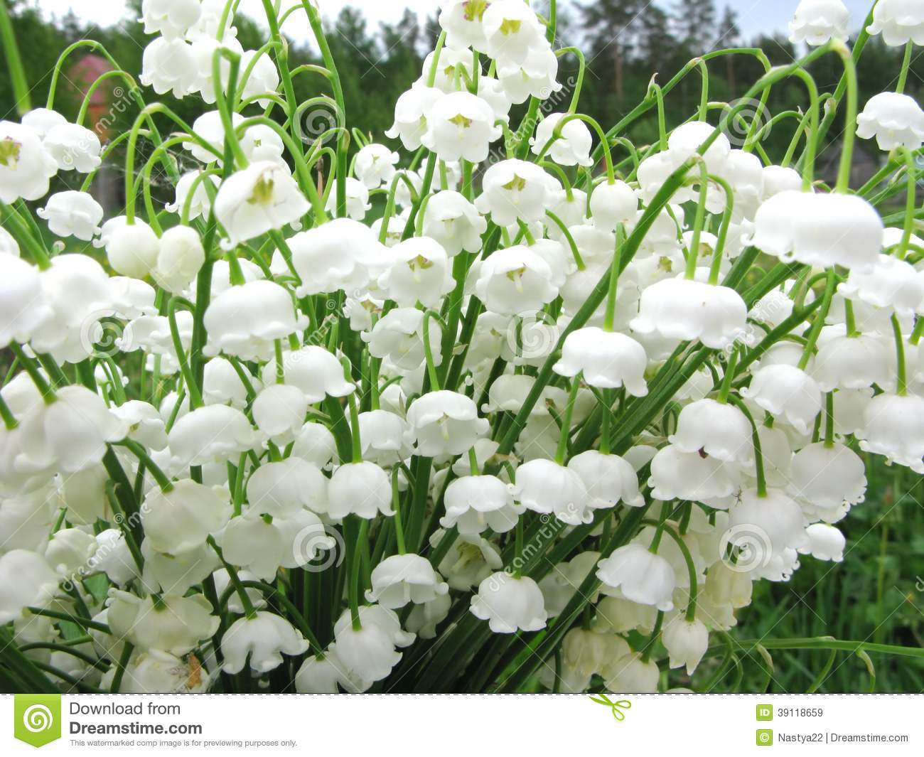 Bouquet des fleurs du muguet image stock image 39118659 - Bouquet de muguet photo ...