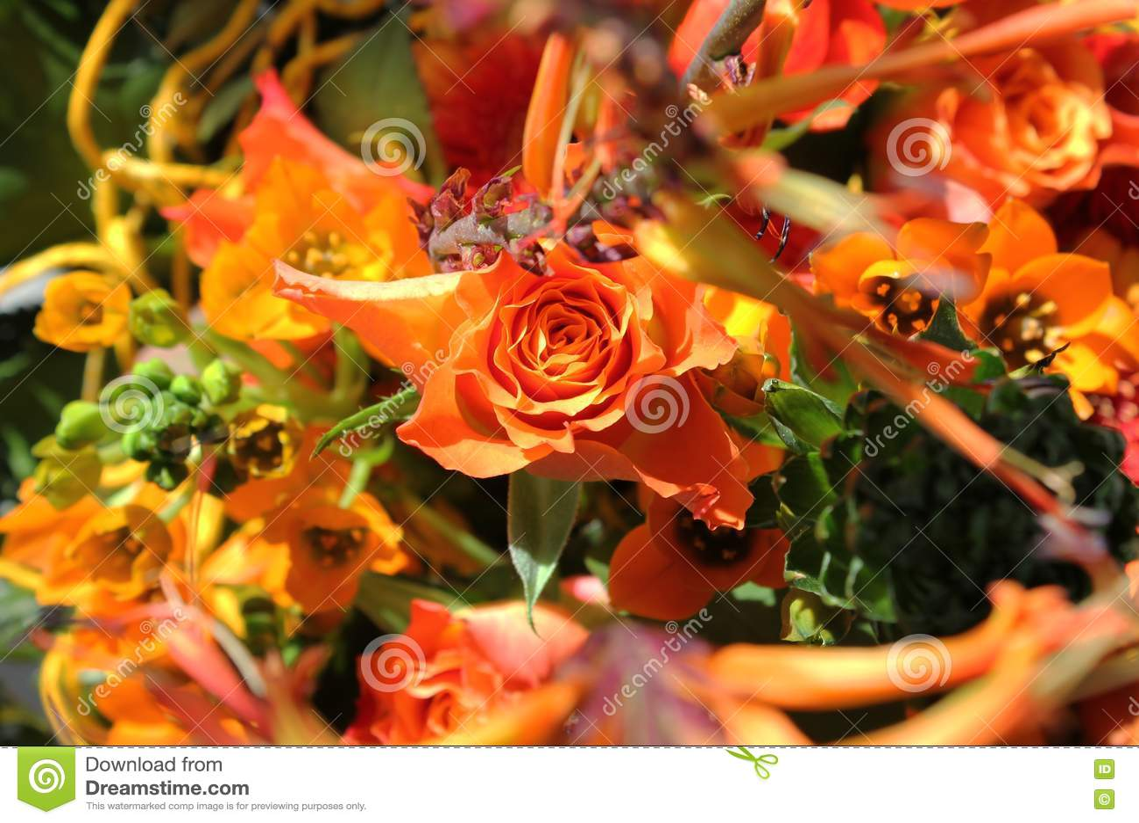 Bouquet des fleurs exotiques photo stock image 23918628 for Bouquet de fleurs lumineux