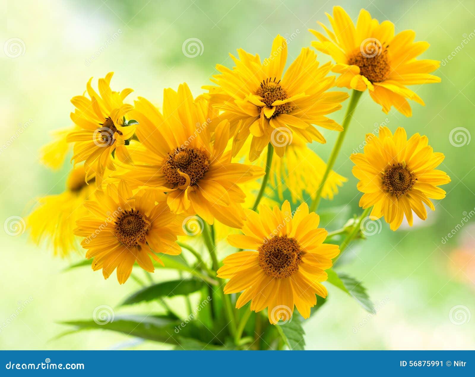 Bouquet des fleurs jaunes de marguerite image stock for Bouquet de fleurs jaunes