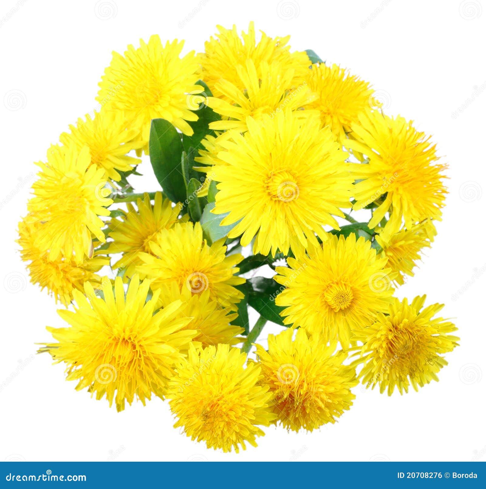 Bouquet des fleurs jaunes du pissenlit photo stock image for Bouquet de fleurs jaunes