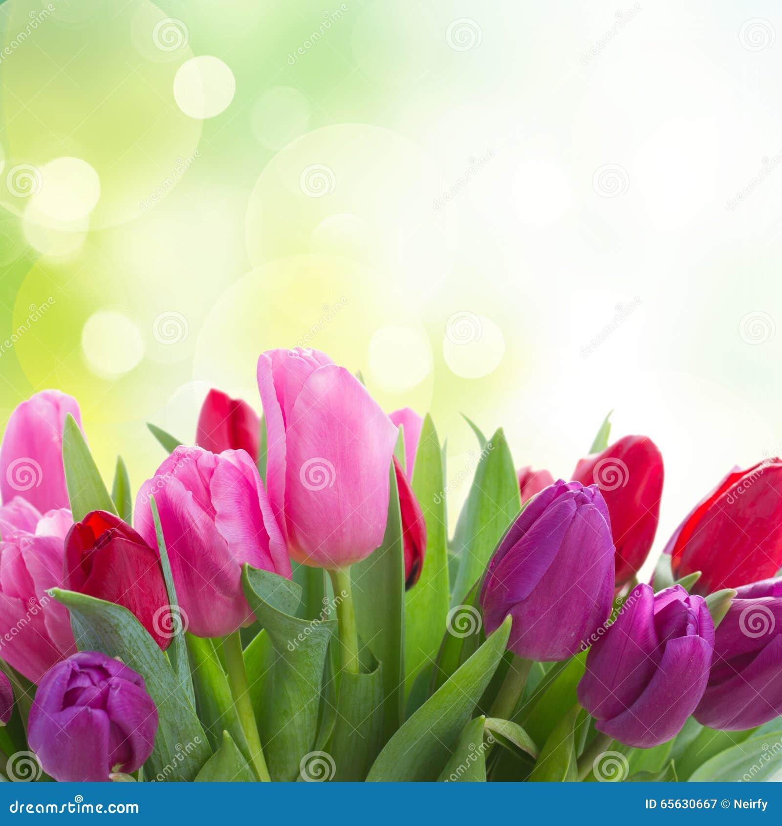 Bouquet des fleurs rouges et pourpres de tulipe