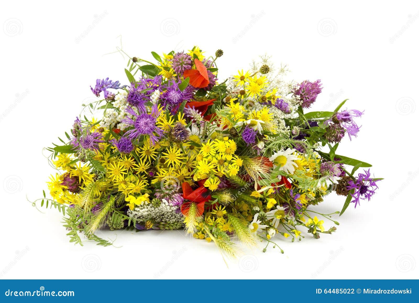 Bouquet des fleurs sauvages photo stock image du lumineux rose 64485022 - Bouquet de fleurs sauvages ...