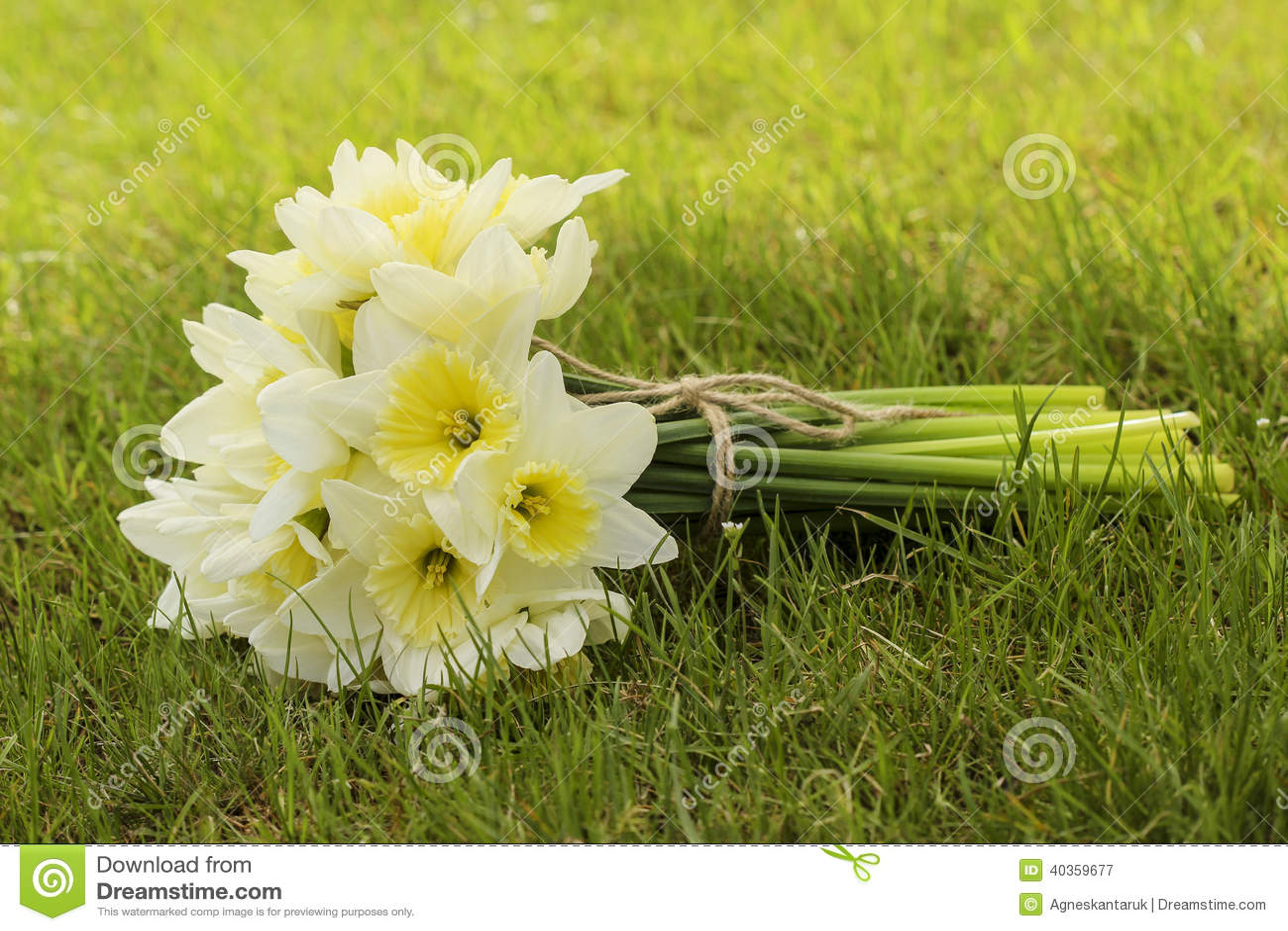Bouquet des jonquilles sur l herbe verte fraîche
