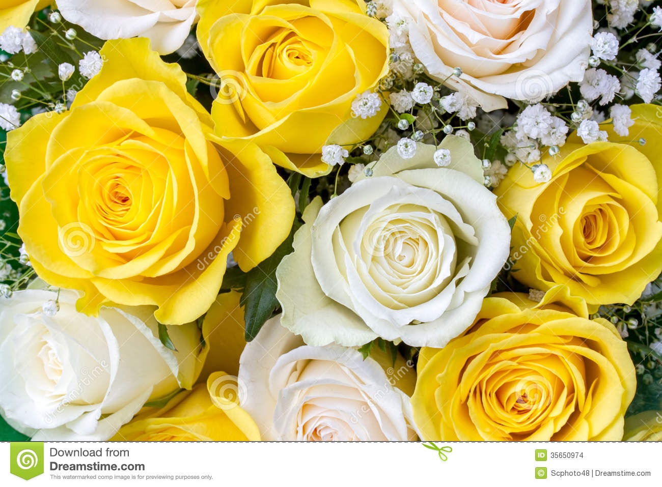 Bouquet des roses jaunes et blanches photo stock image for Bouquet de roses blanches