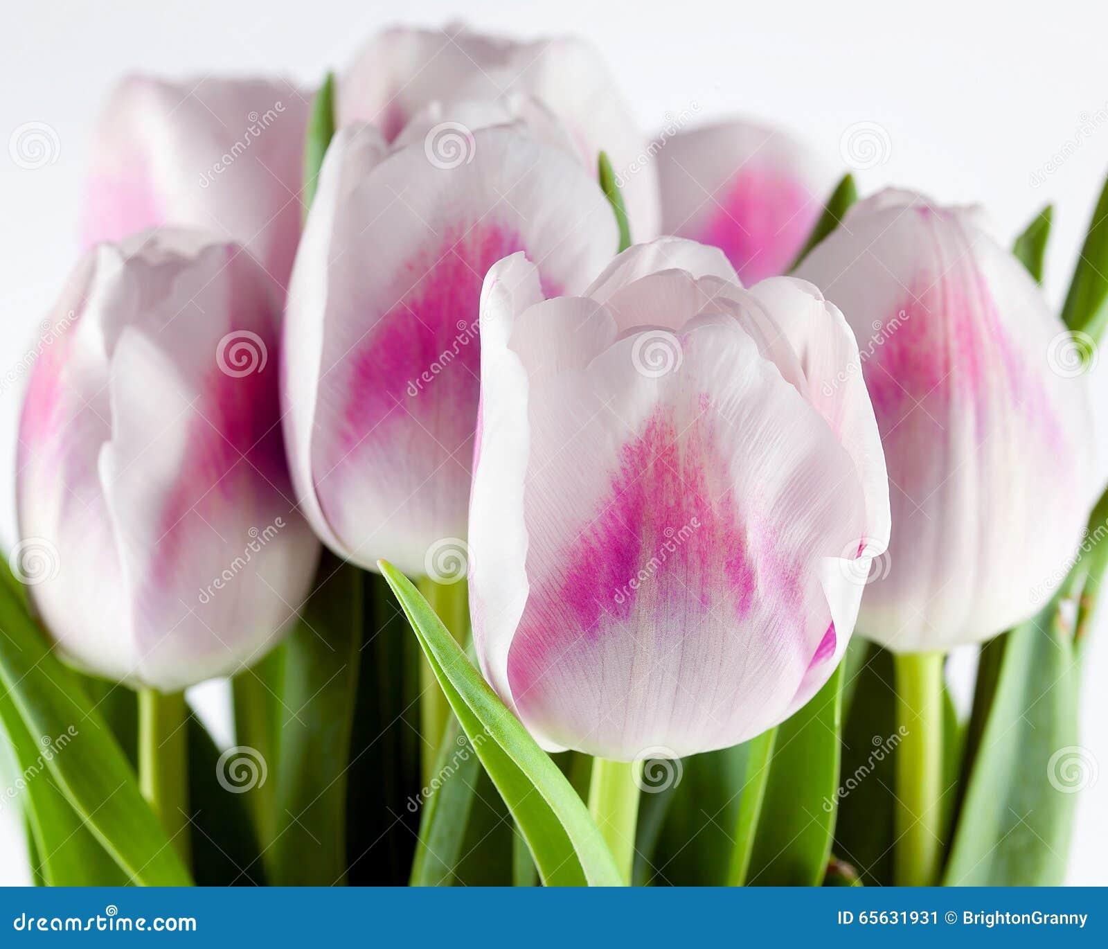 Bouquet des tulipes