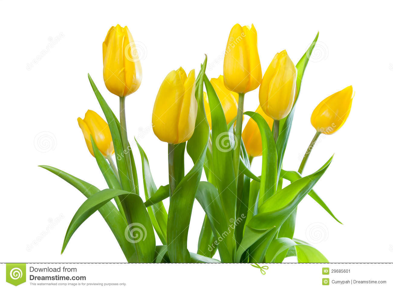 Bouquet des tulipes jaunes image stock image 29685601 for Bouquet de tulipes