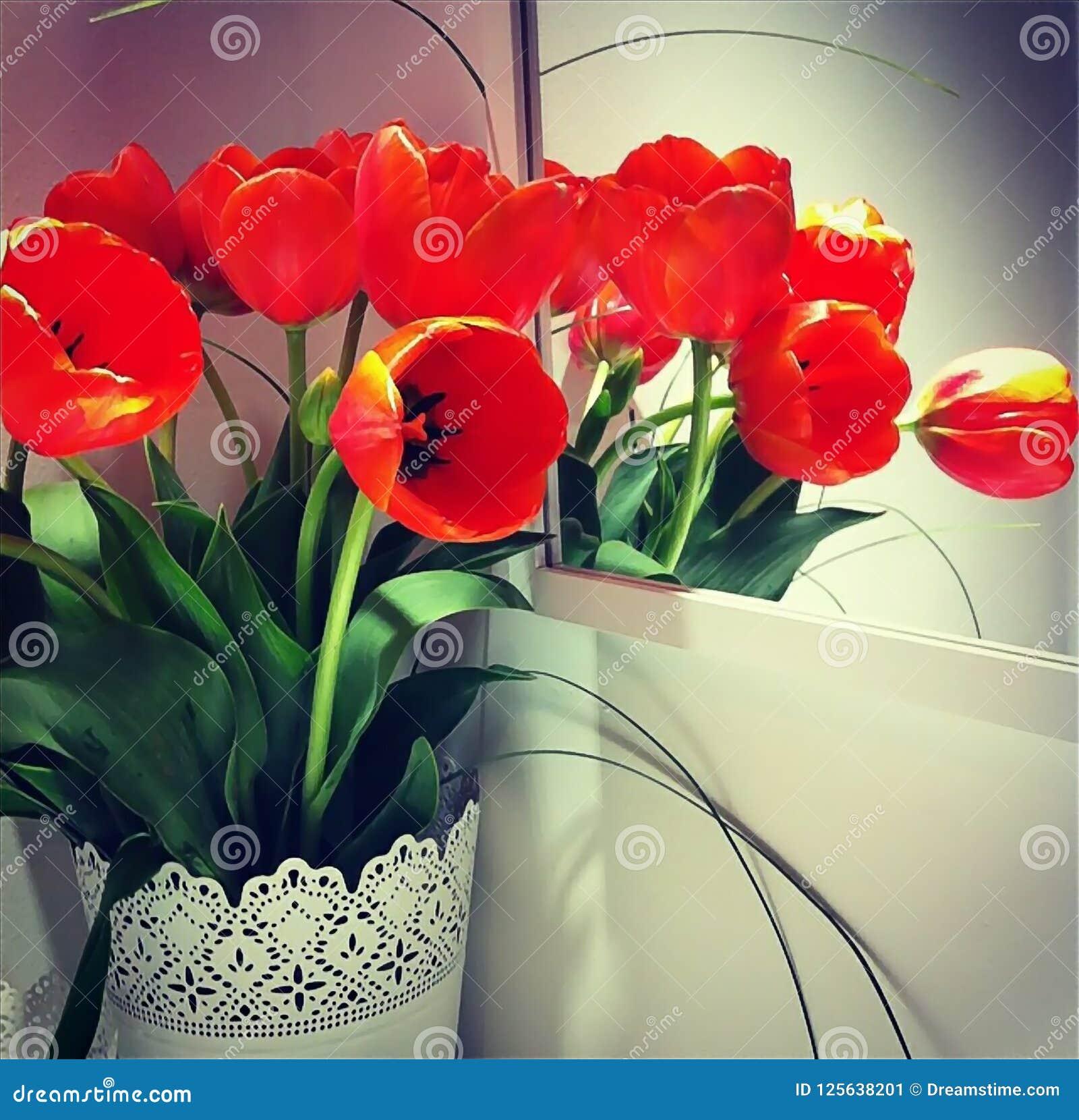 Bouquet des tulipes oranges