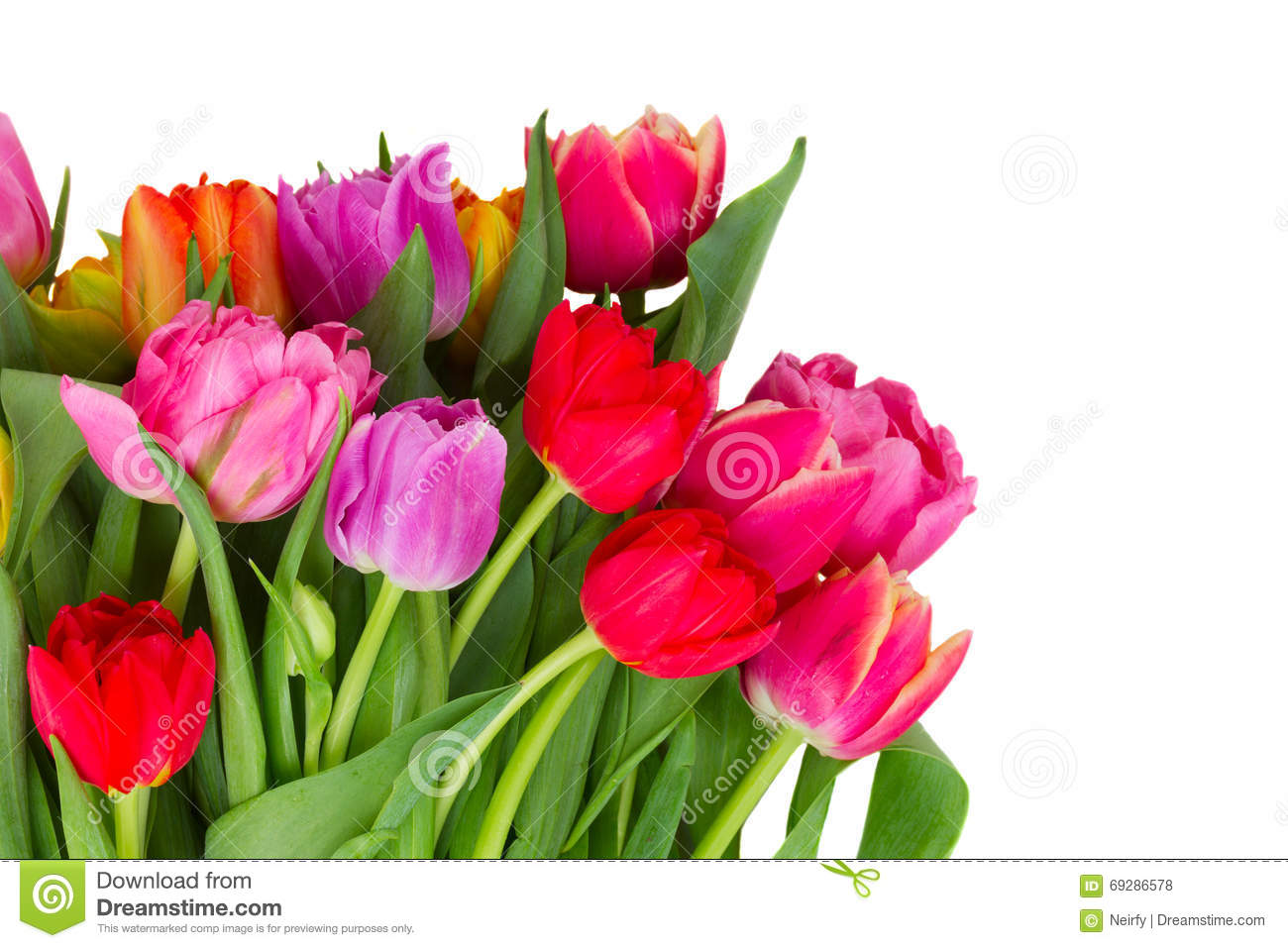 Bouquet des tulipes roses pourpres et rouges photo stock for Bouquet de tulipes