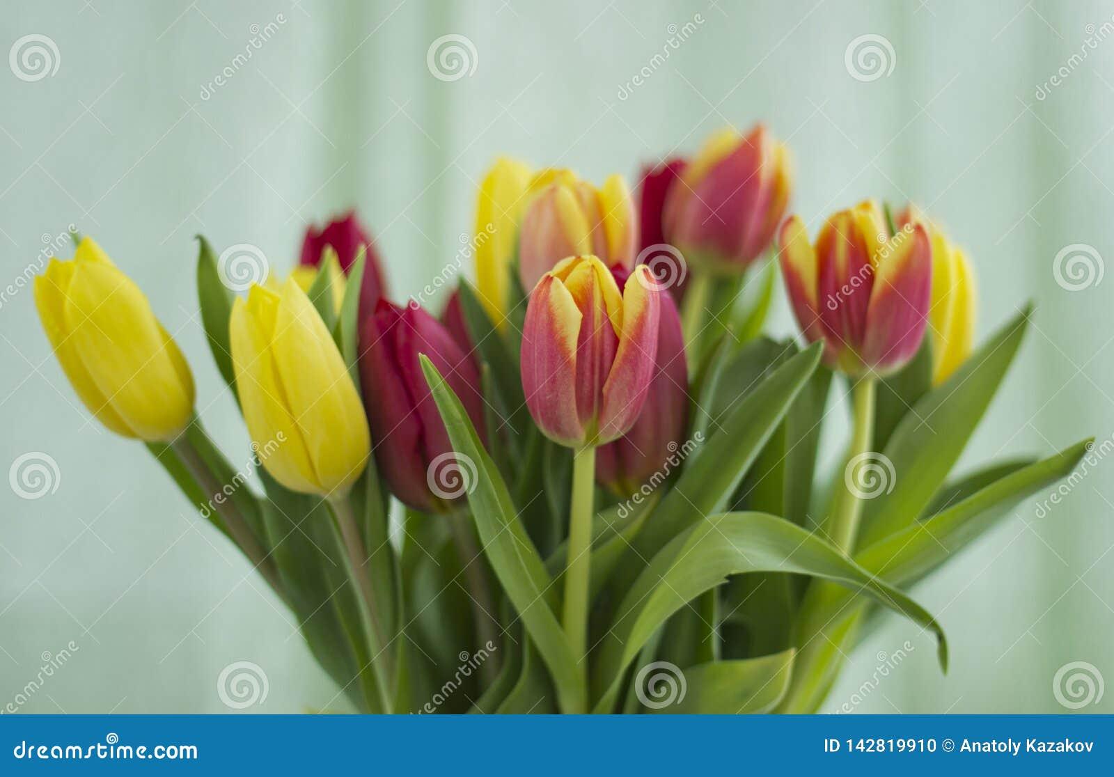 Bouquet des tulipes sur un fond clair