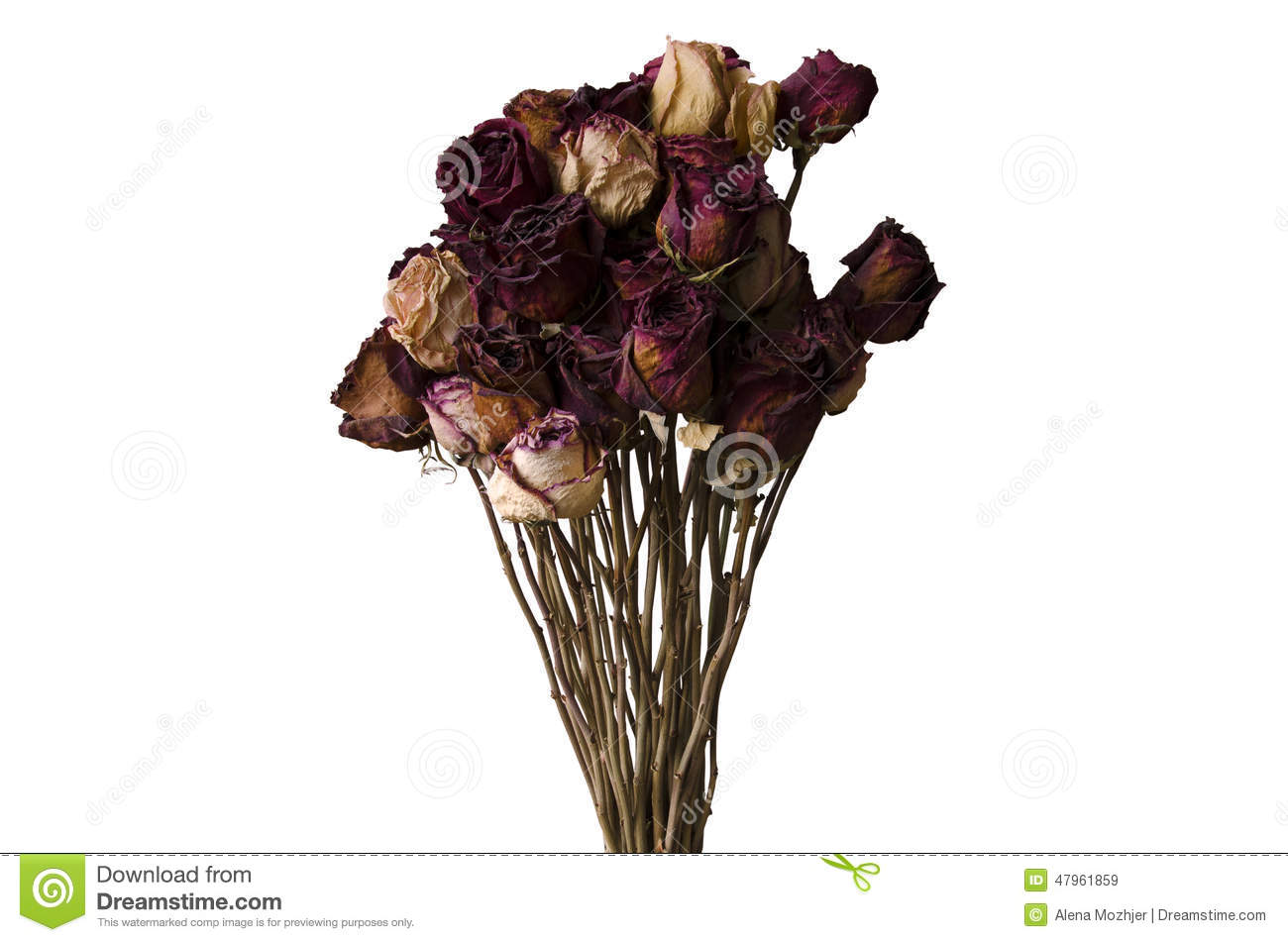 Bouquet Of Dried Flowers On A White Background Stock Image - Image ...