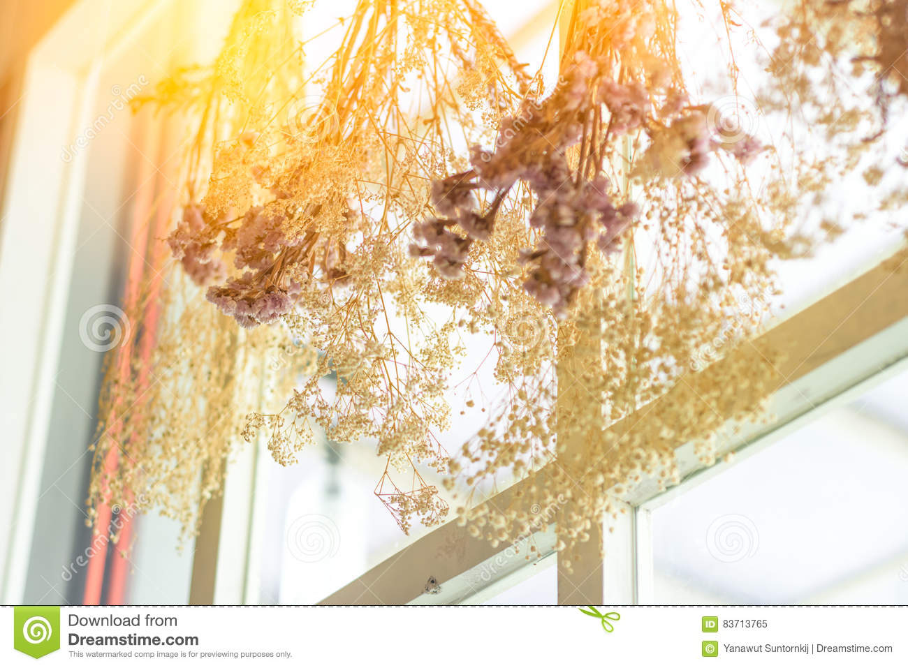 Bouquet Of Dry Flower And Grass Hanging On Wall Stock Image Image Of Dead Flora 83713765