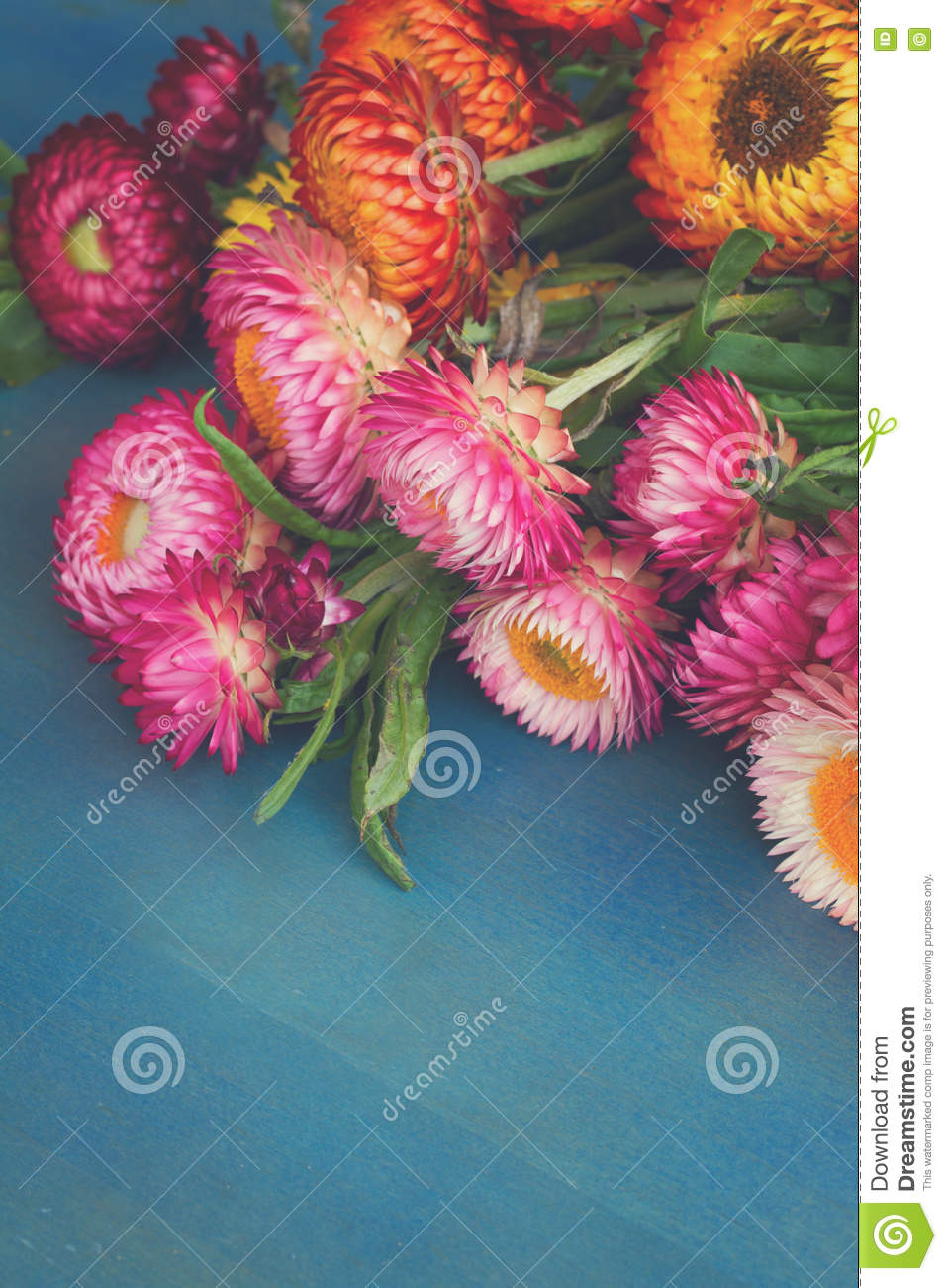 Bouquet Of Everlasting Flowers Stock Image Image Of Bloom Bunch