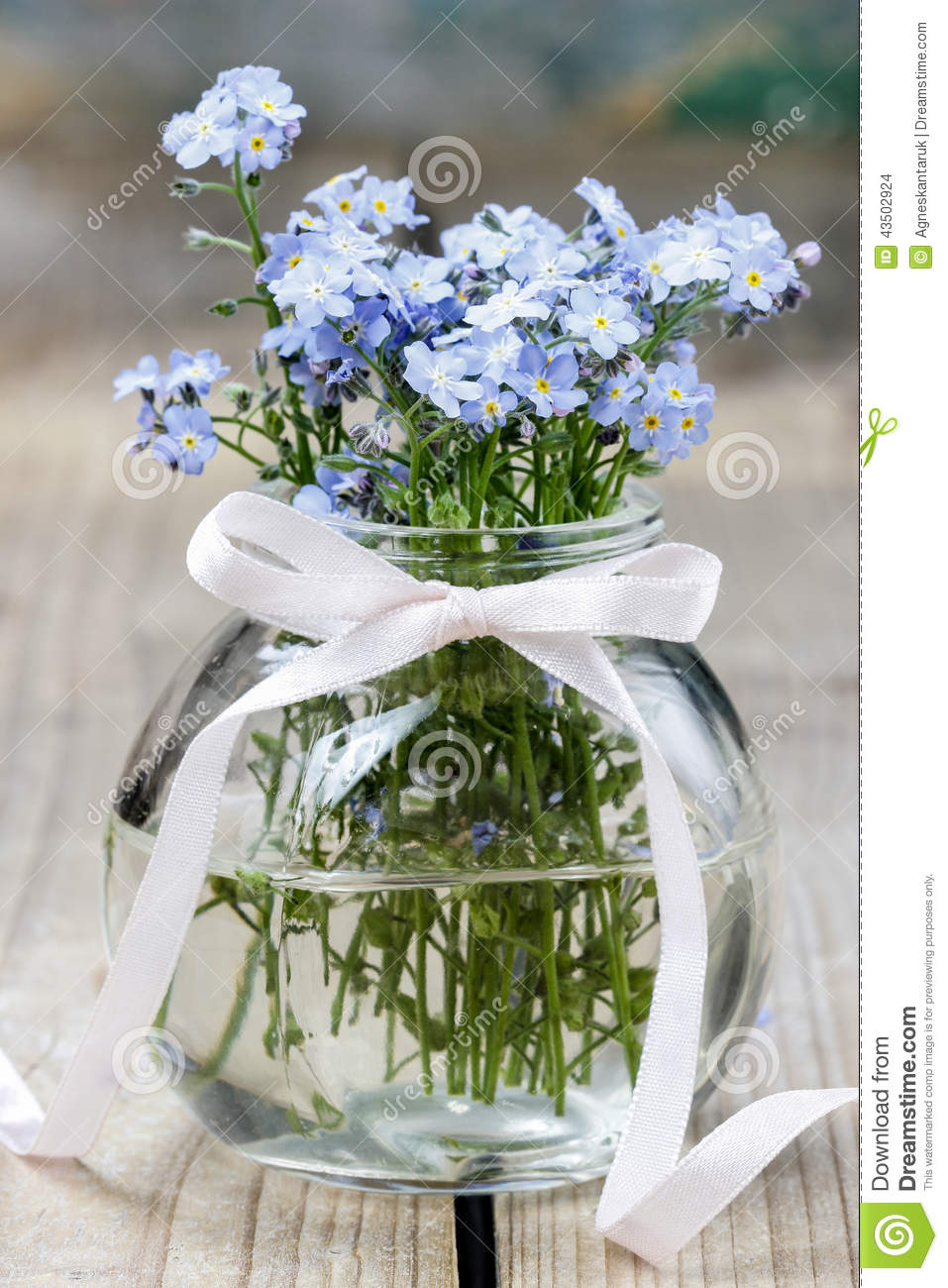 Bouquet Of Forget Me Not Flowers In Glass Vase Stock Photo