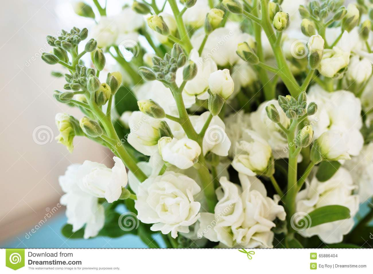 Bouquet Of Fragrant White Stock Flowers Matthiola Stock Photo