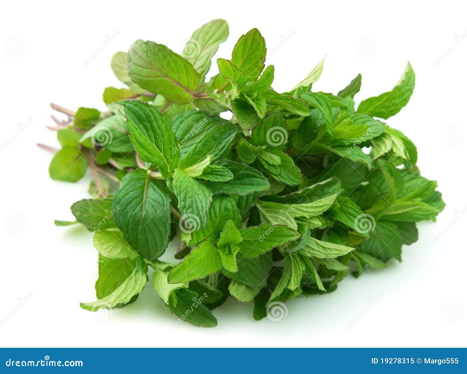 how to cut fresh mint