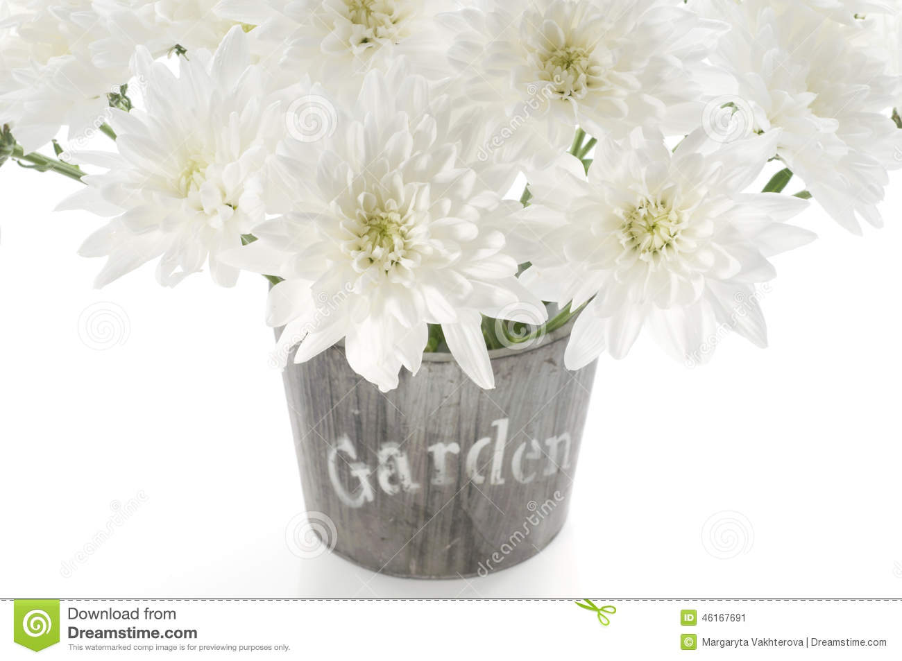 bouquet of fresh white chrysanthemum in a wooden pot stock photo, Beautiful flower