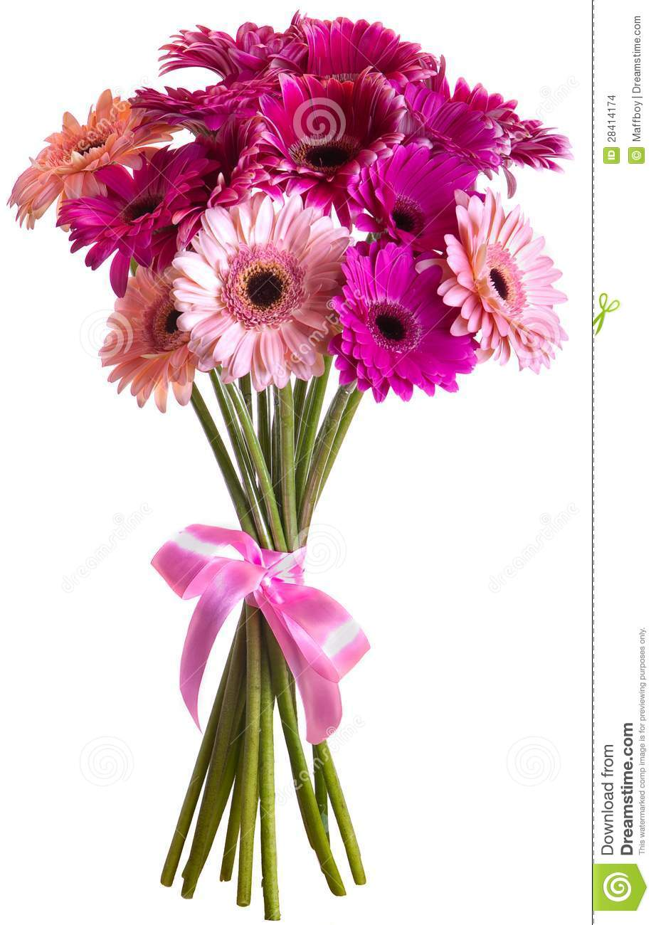 Bouquet of gerbera flowers stock photo image of studio for Bouquet de fleurs gerbera