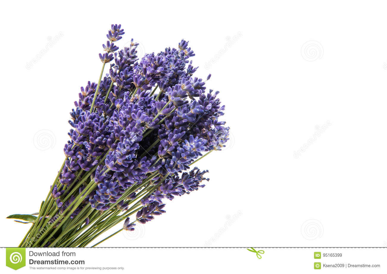 Bouquet of lavender isolated