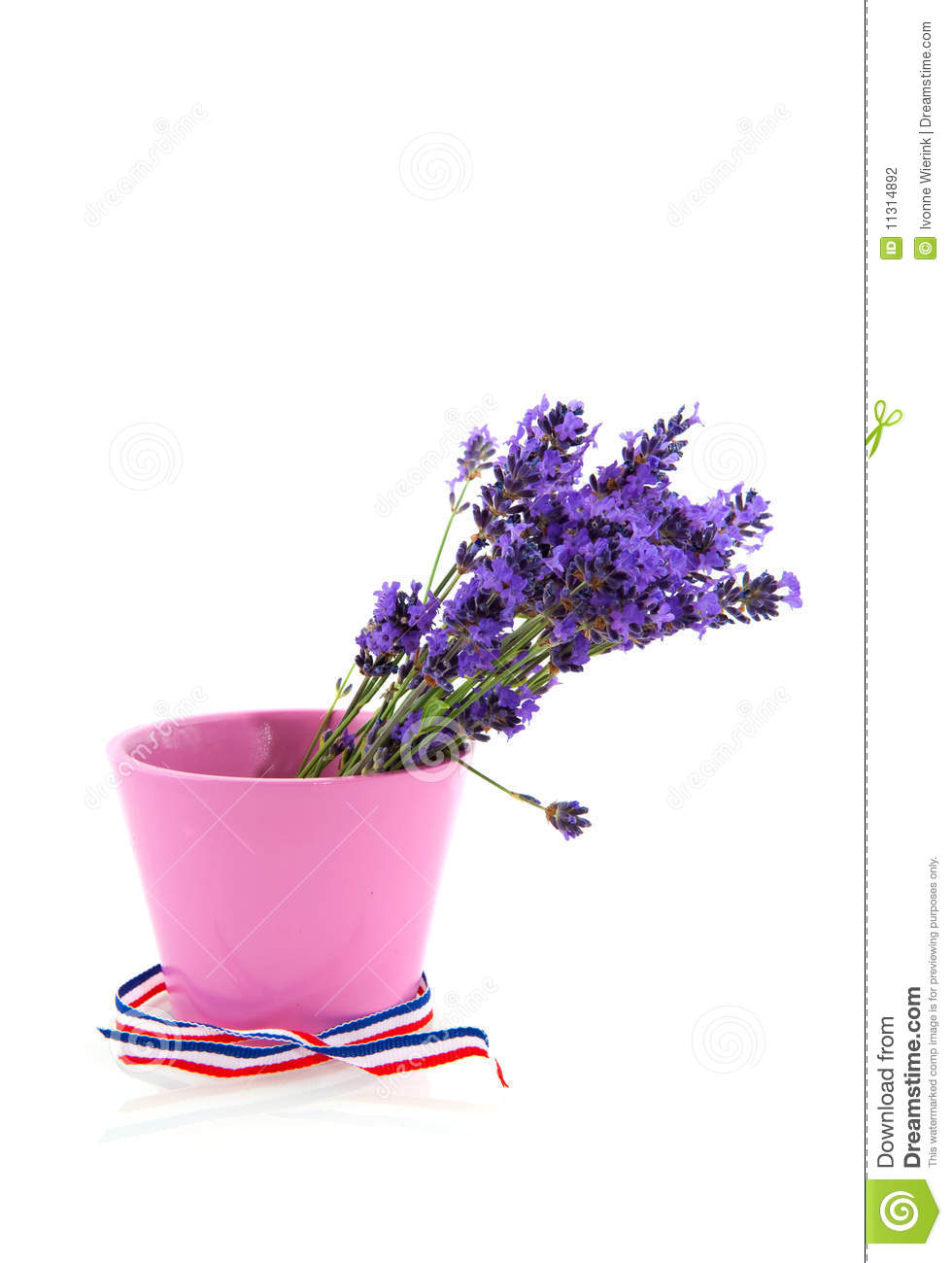 bouquet lavender in pink flower pot stock photography