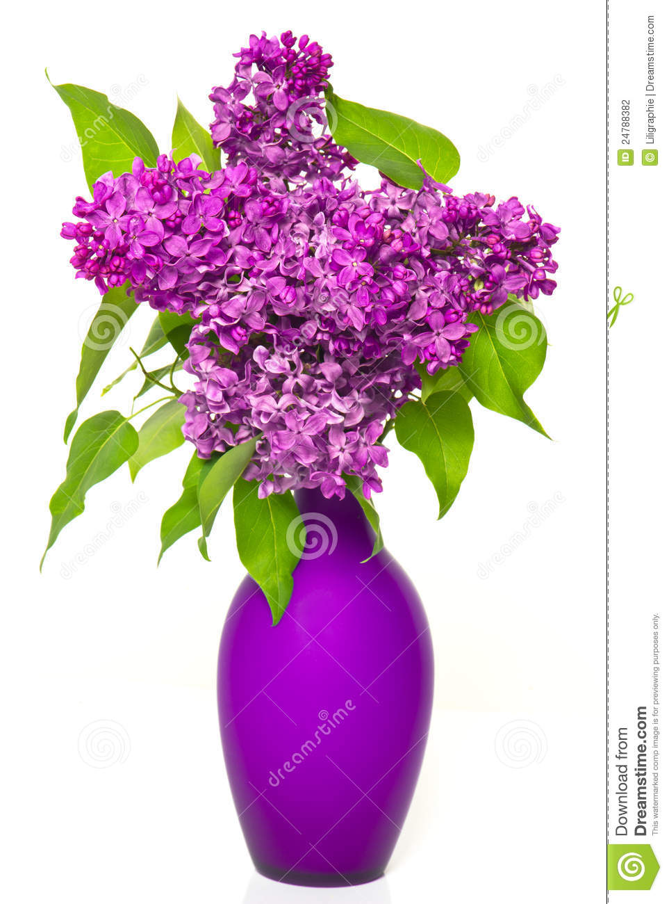 Bouquet Of Lilac Flowers In Vase Stock Photography Image