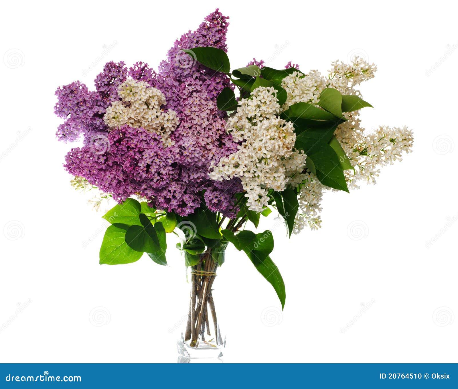 Bouquet lilas sur le blanc photo stock image du lames for Bouquet de fleurs lilas