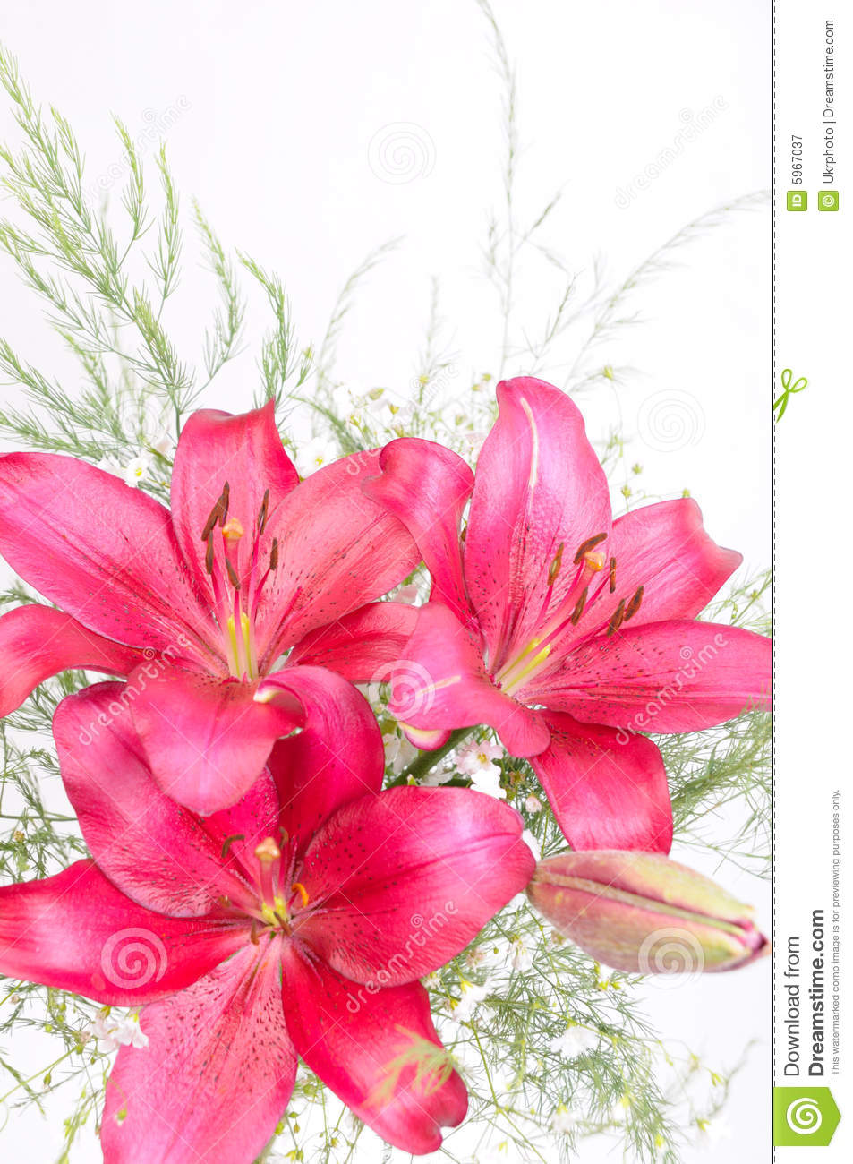 Bouquet Of Lily Flowers Stock Image Image Of Summer Color 5967037