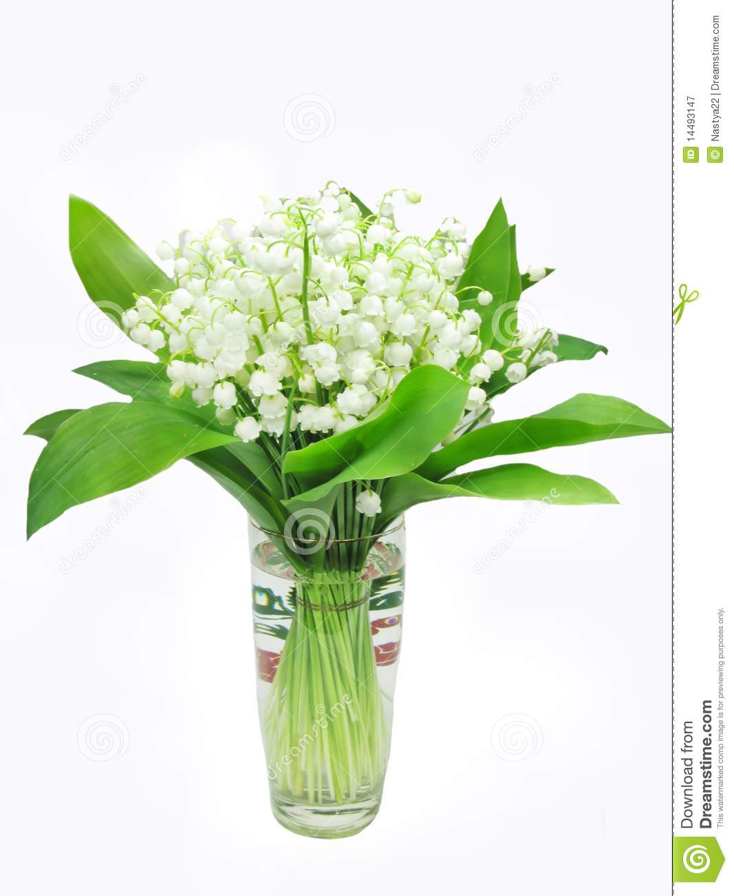 Lily Of The Valley Bouquet: Bouquet Of Lily Of The Valley Flowers Stock Image