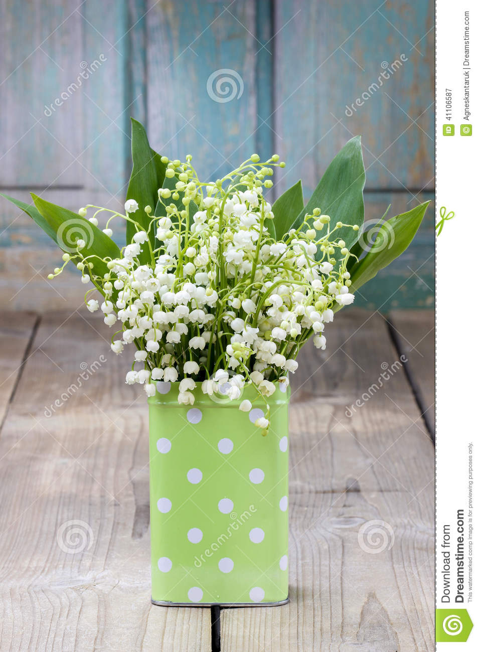 Bouquet of lily of the valley flowers in green dotted can stock download comp izmirmasajfo