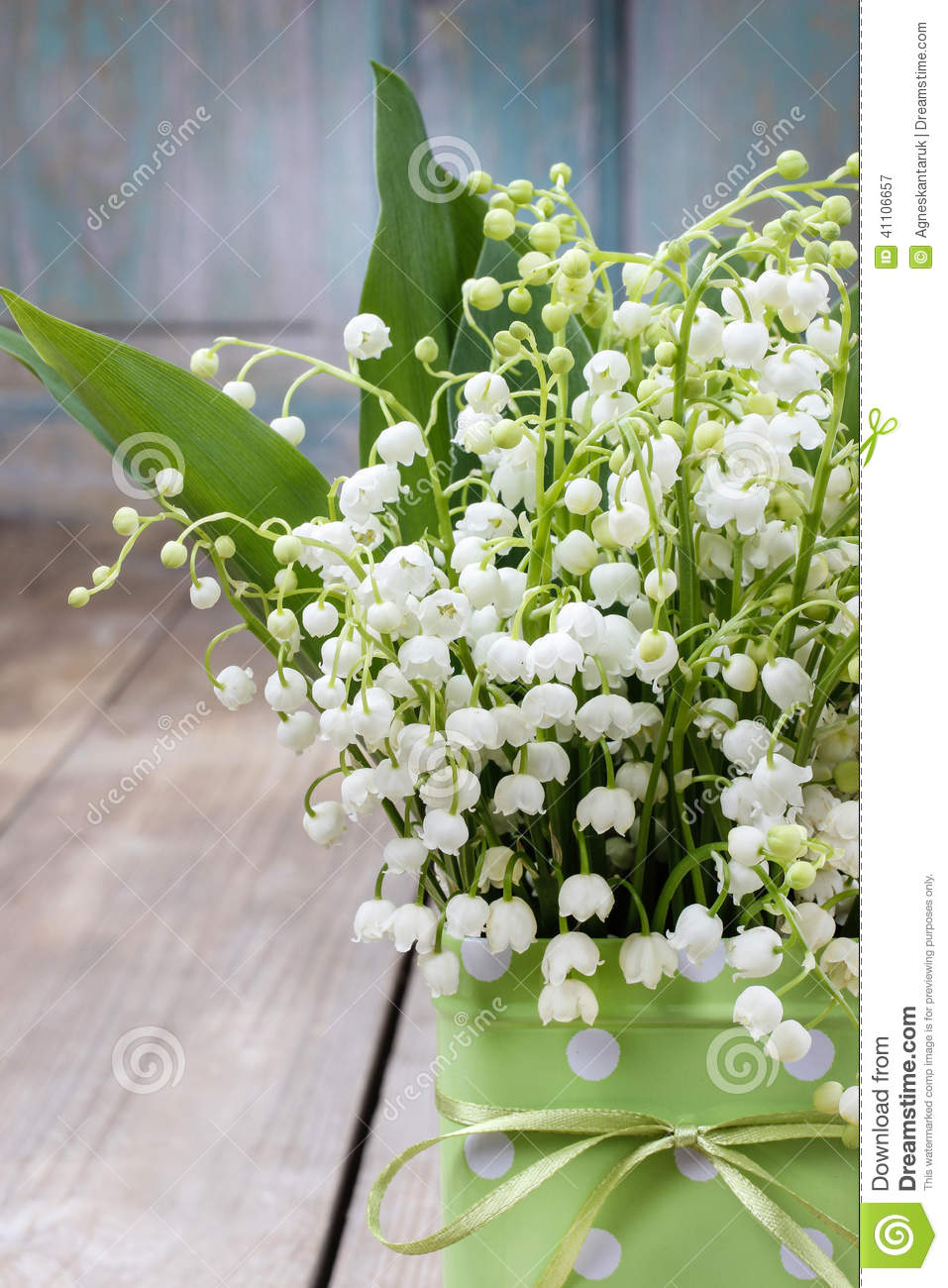 Bouquet of lily of the valley flowers in green dotted can stock bouquet of lily of the valley flowers in green dotted can stock image image of happiness cheerful 41106657 izmirmasajfo