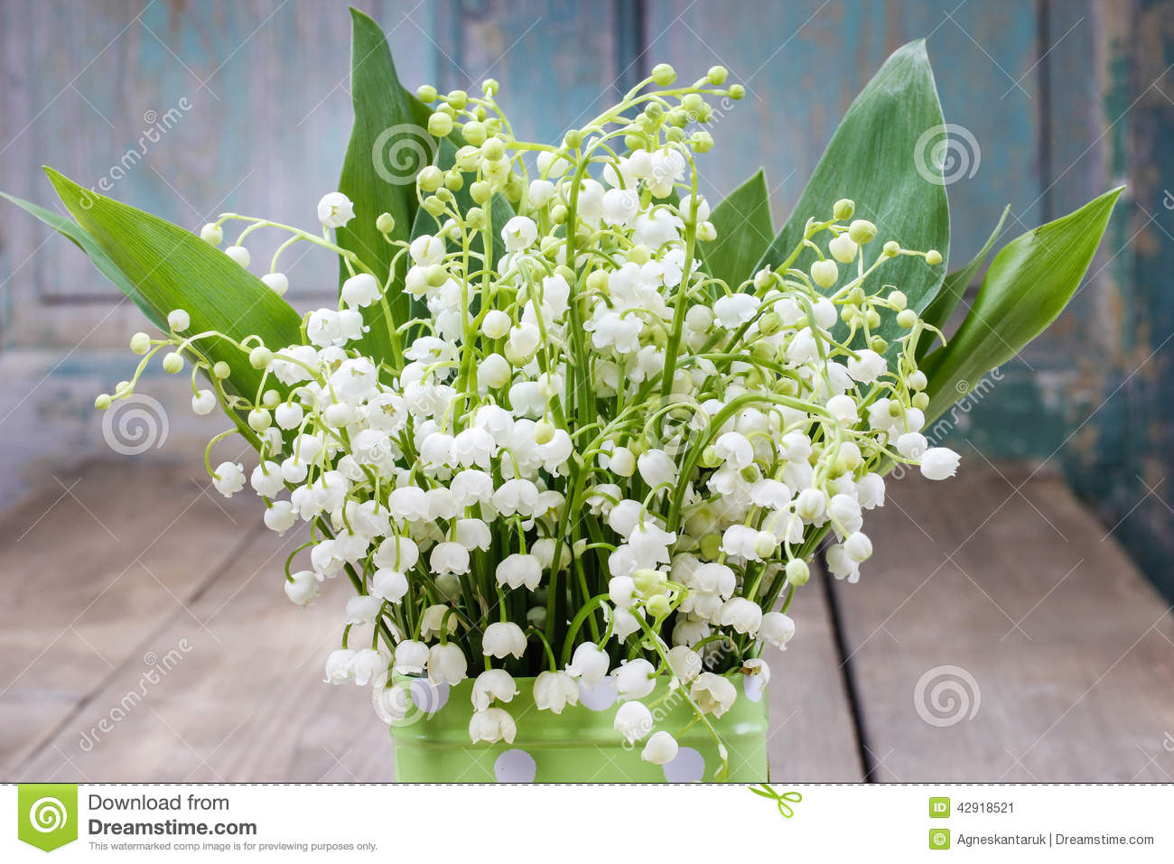 Bouquet of lily of the valley flowers stock image image of cute royalty free stock photo izmirmasajfo