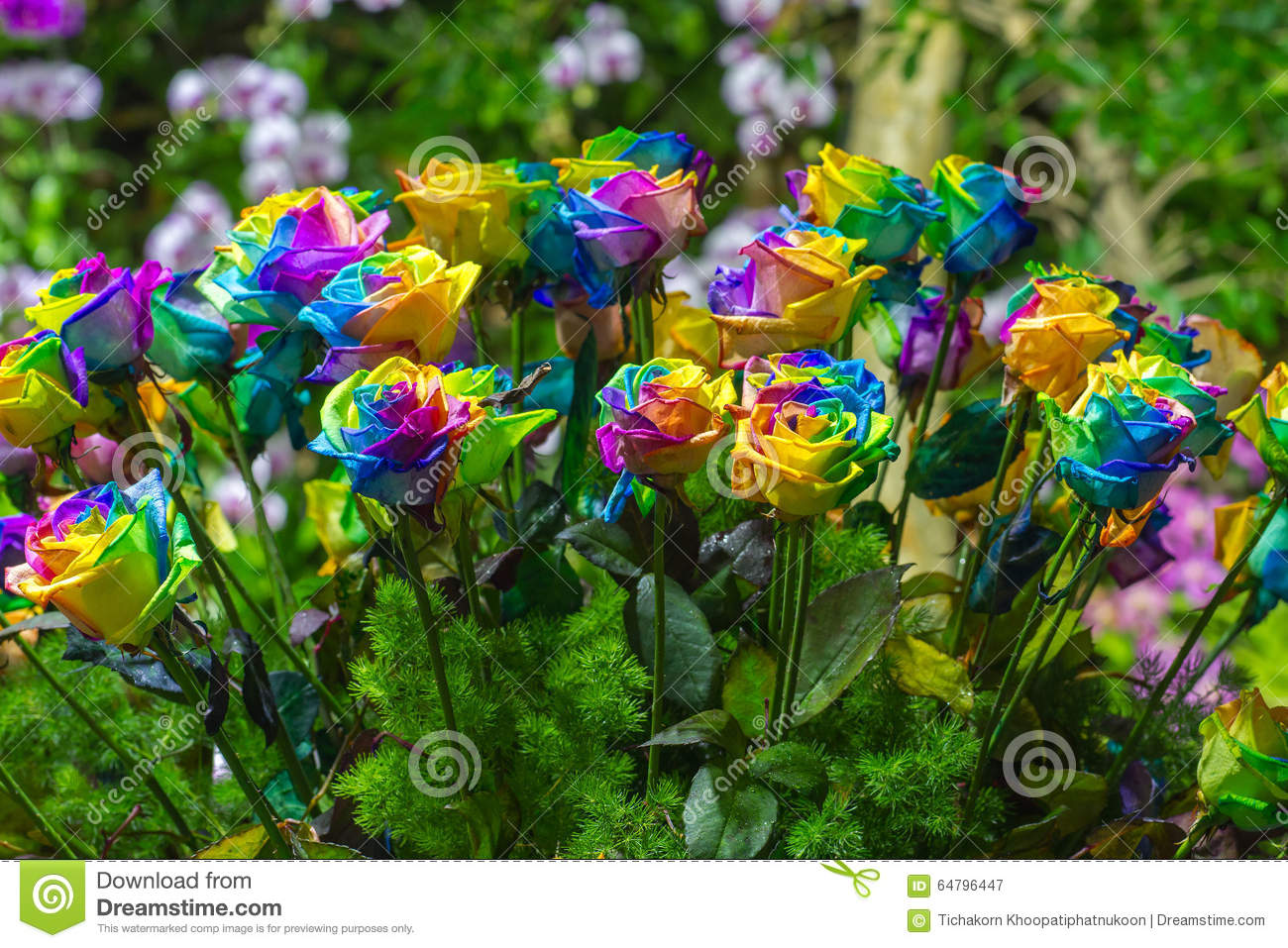 Bouquet Of Multi-colored Roses Rainbow Rose Stock Image ...