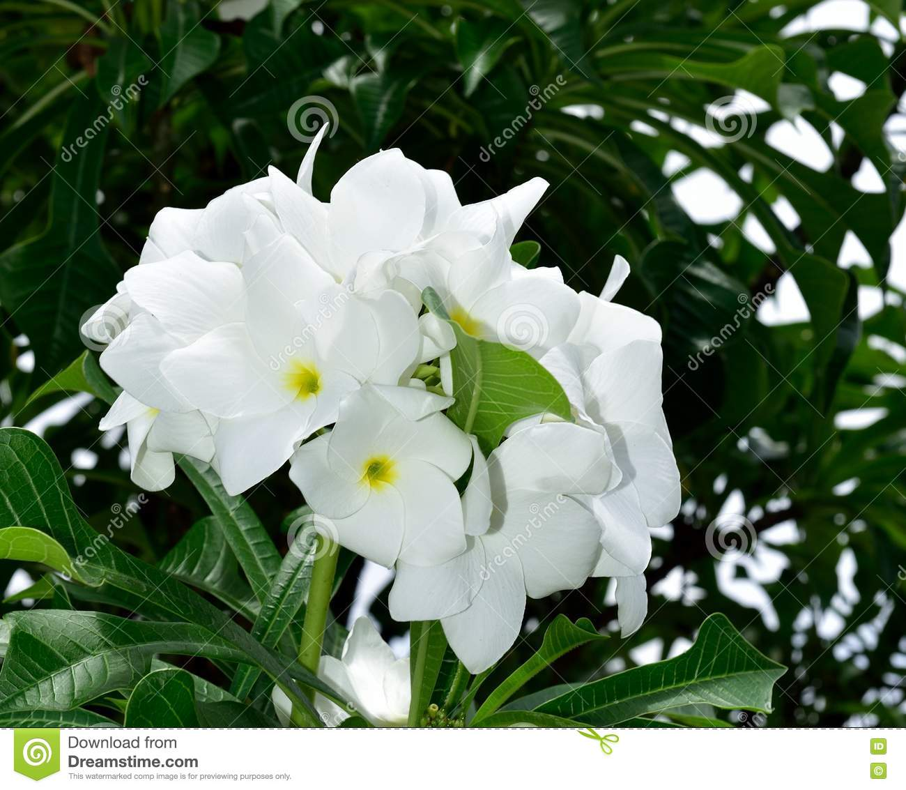 Bouquet Of Natural White Flowers Stock Image Image Of Death
