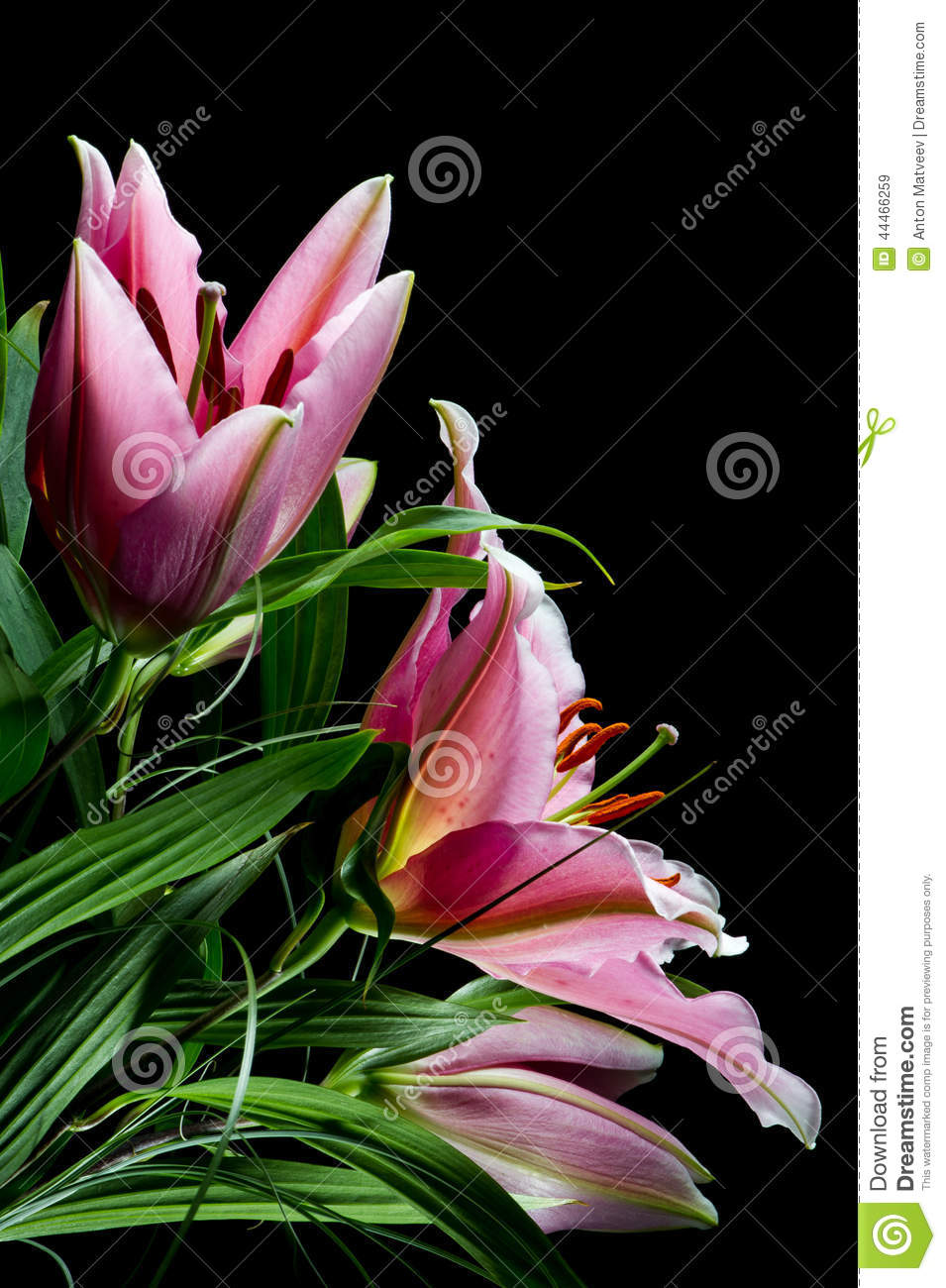 Bouquet Of Lilies Stock Image Image Of Flowers Leaf 44466259
