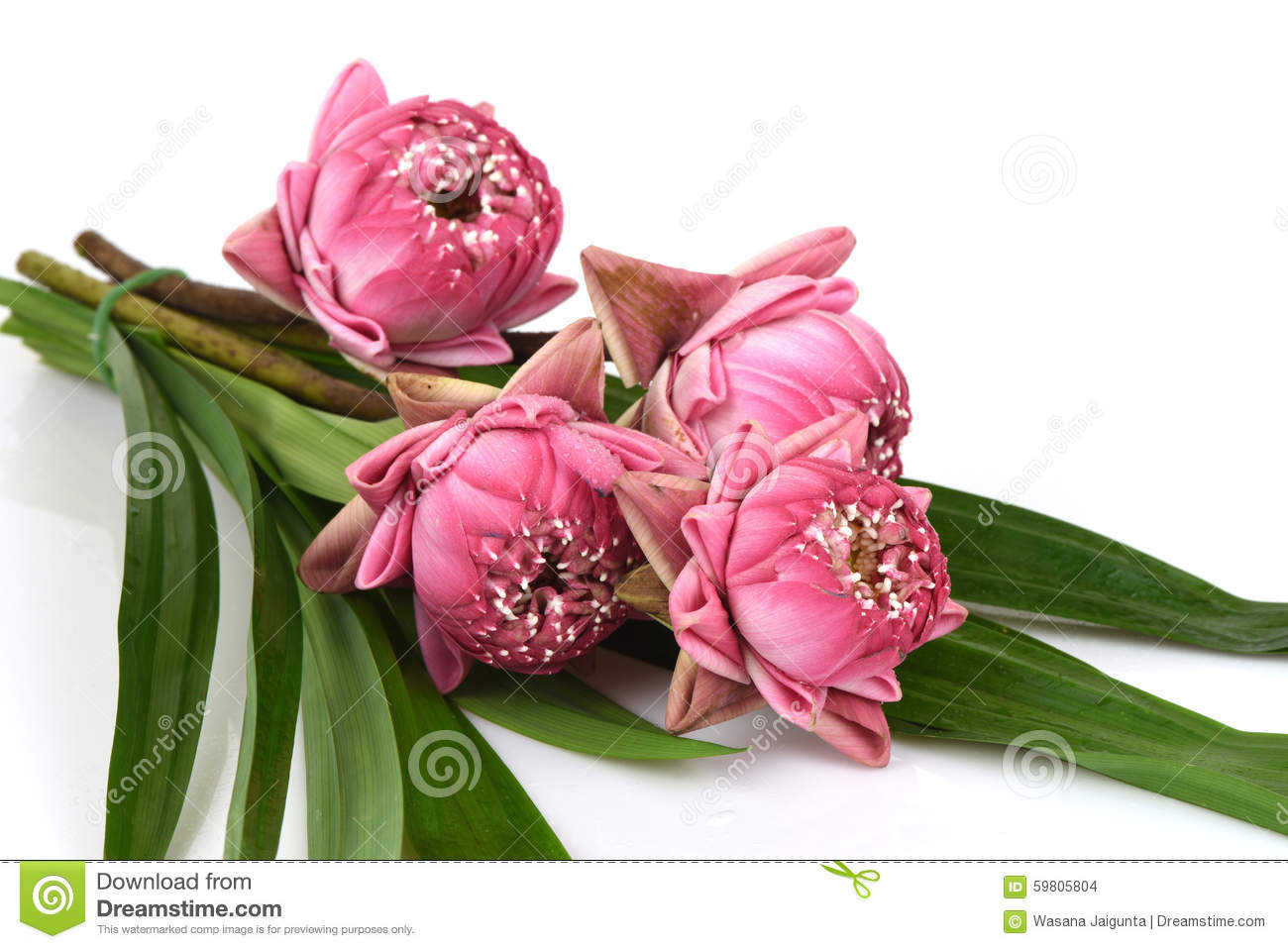 A Bouquet Of Pink Lotus On A White Background Stock Photo Image