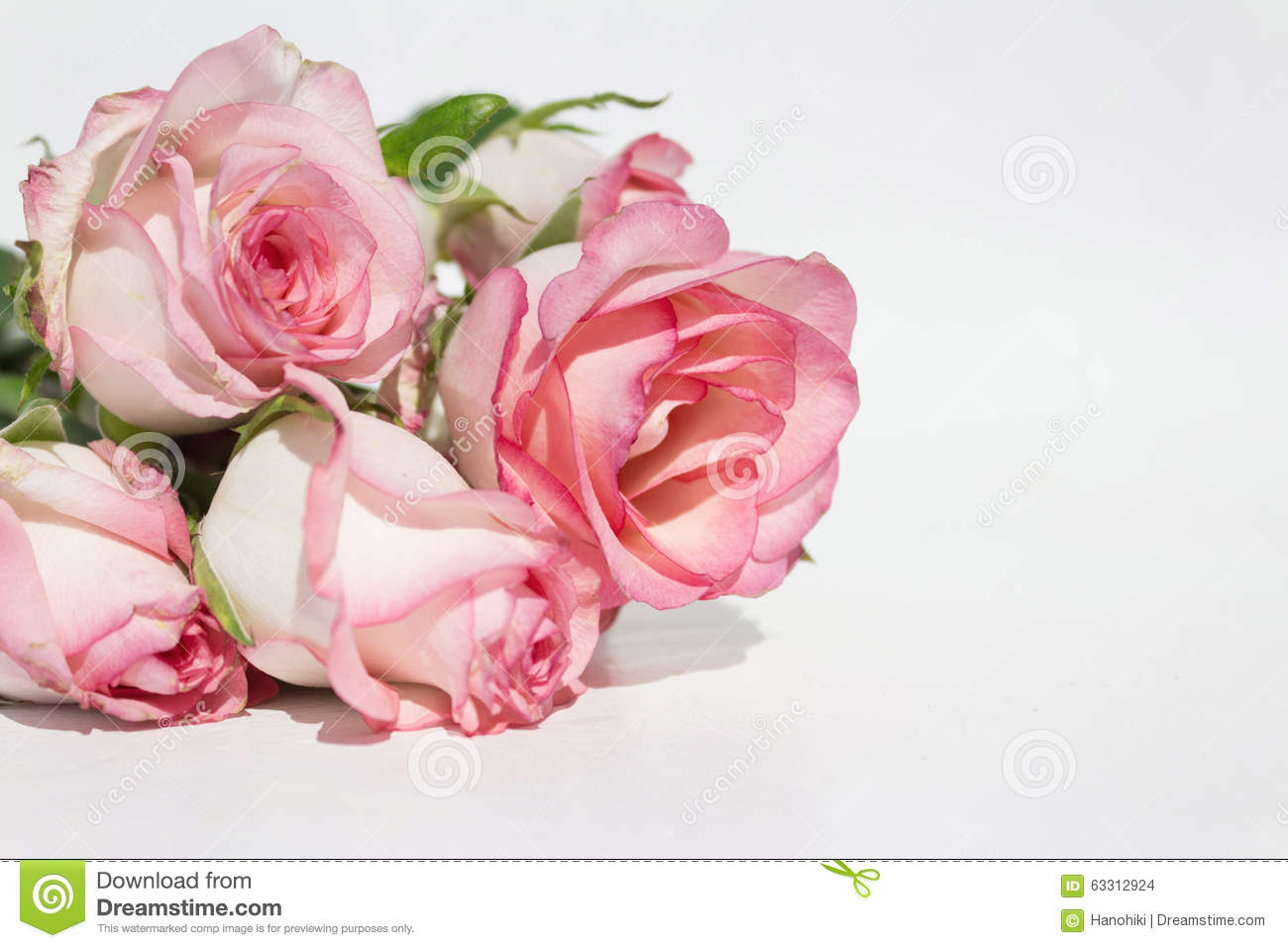 bouquet pink roses on white background stock photo image
