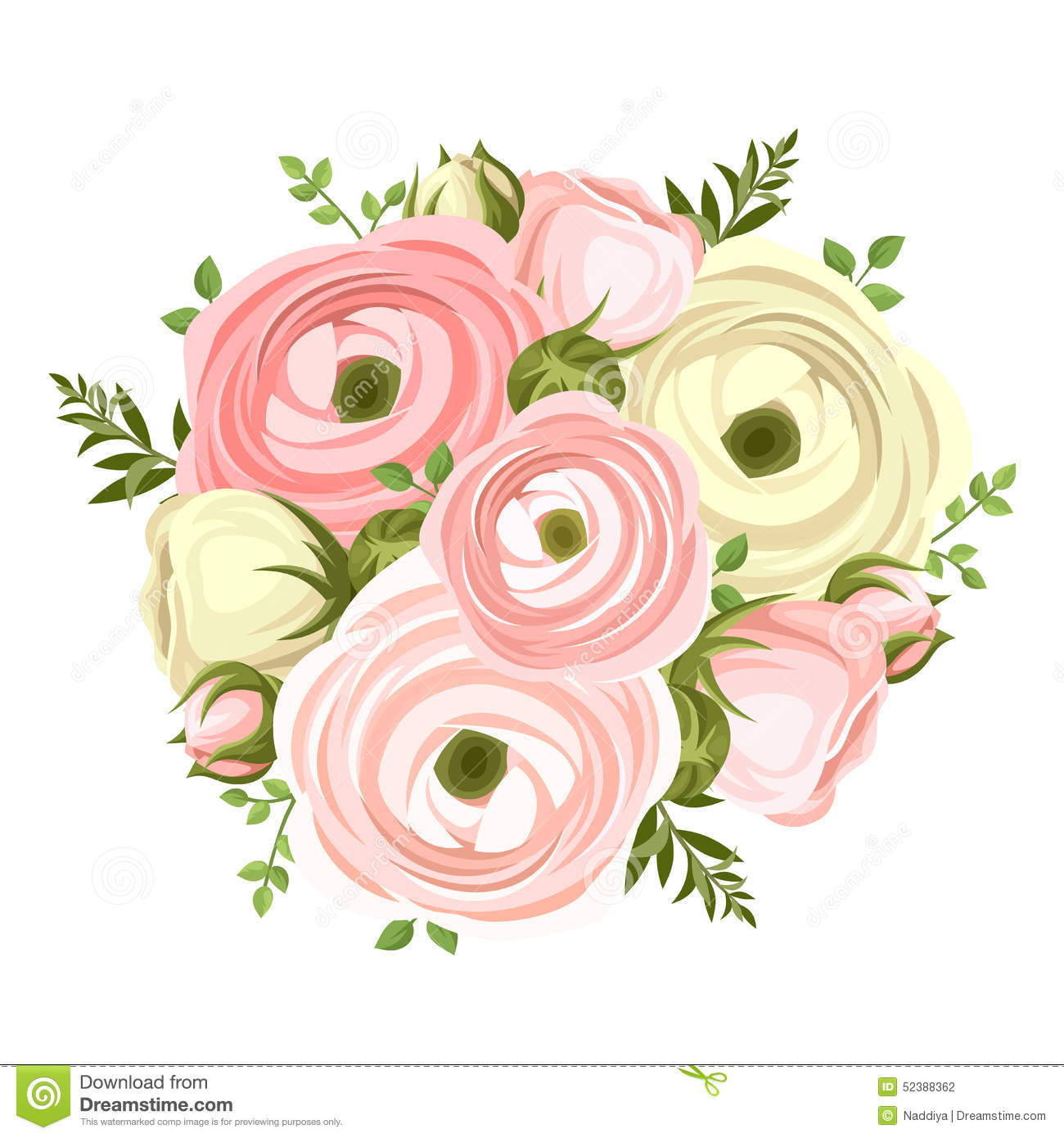 Bouquet Of Pink And White Ranunculus Flowers Vector