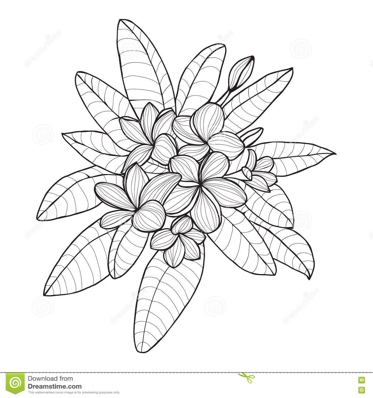 coloring pages of plumerias - photo#5