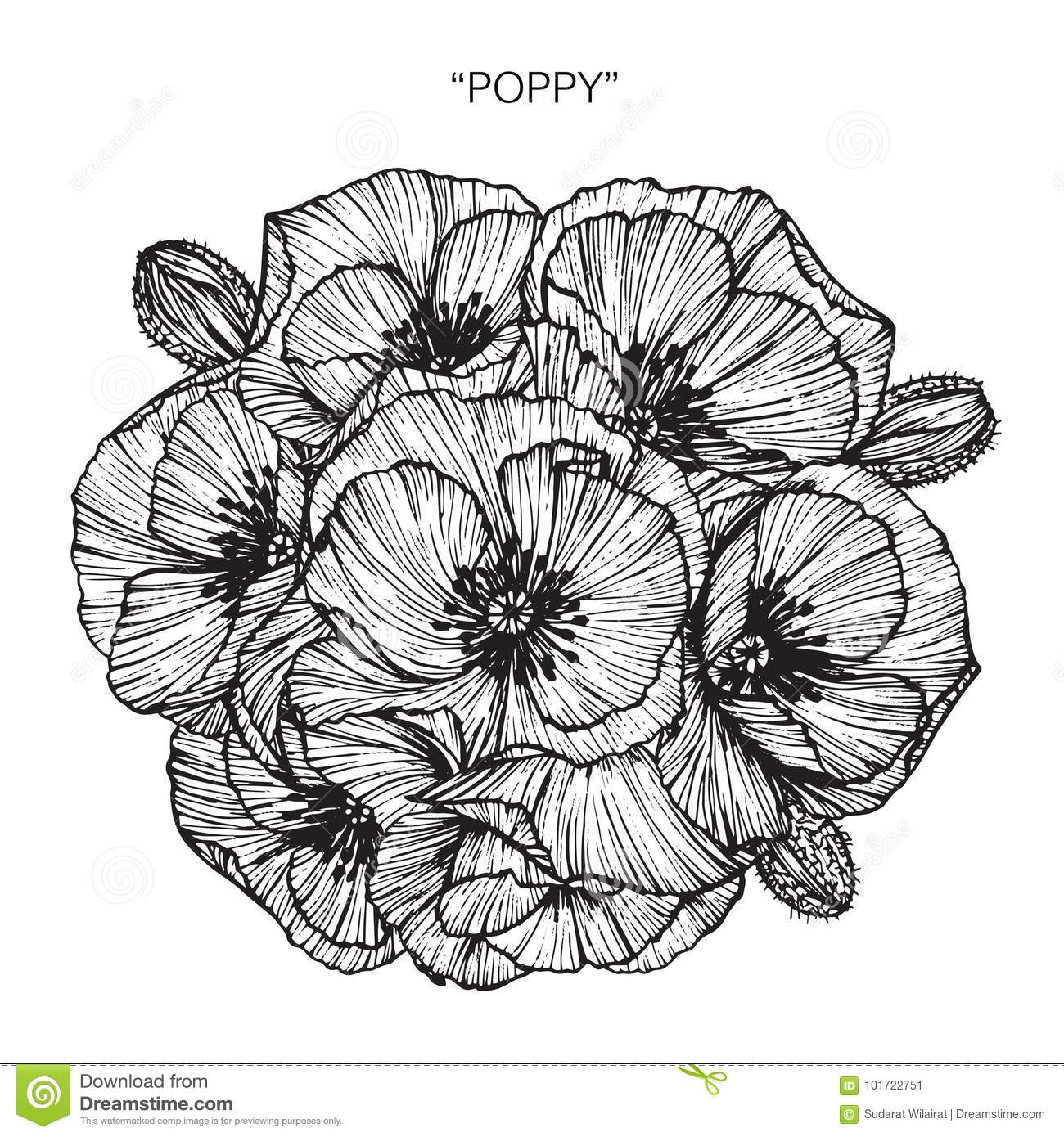 Bouquet Of Poppy Flower Drawing And Sketch Stock Illustration