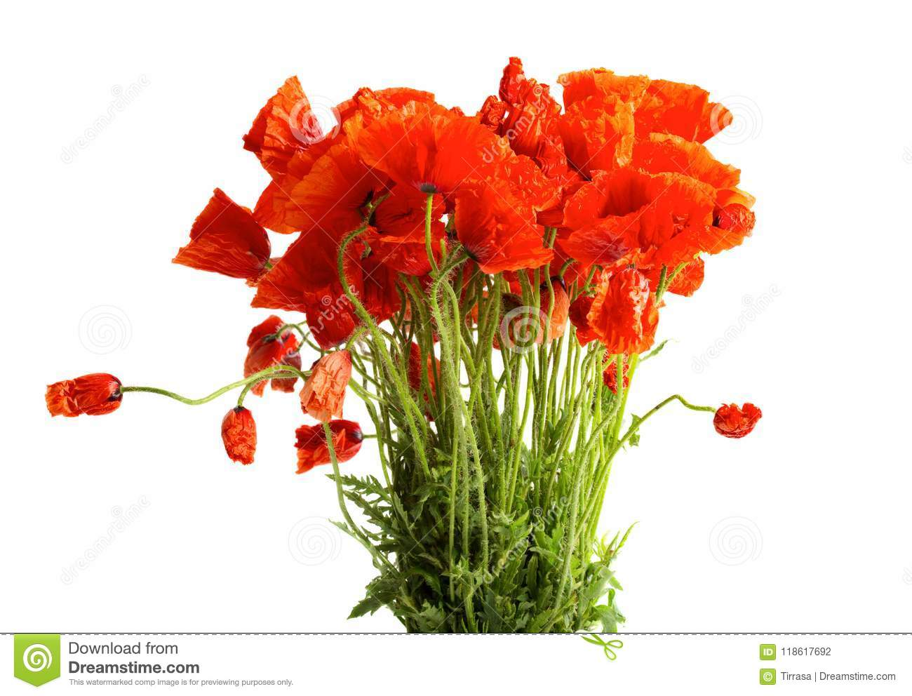Bouquet Of Poppy Flowers Stock Photo Image Of Bunch 118617692