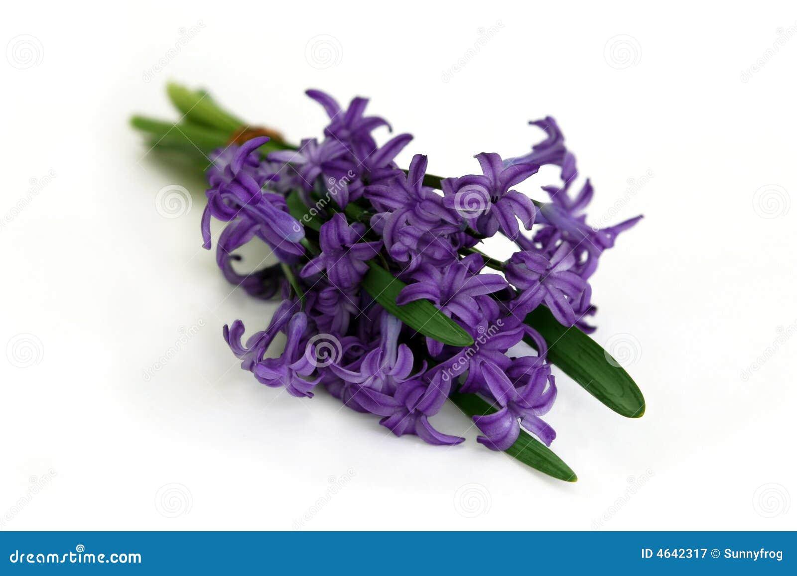 Bouquet of purple hyacinth stock photo image 39366558 bouquet of purple hyacinth royalty free stock photography dhlflorist Choice Image