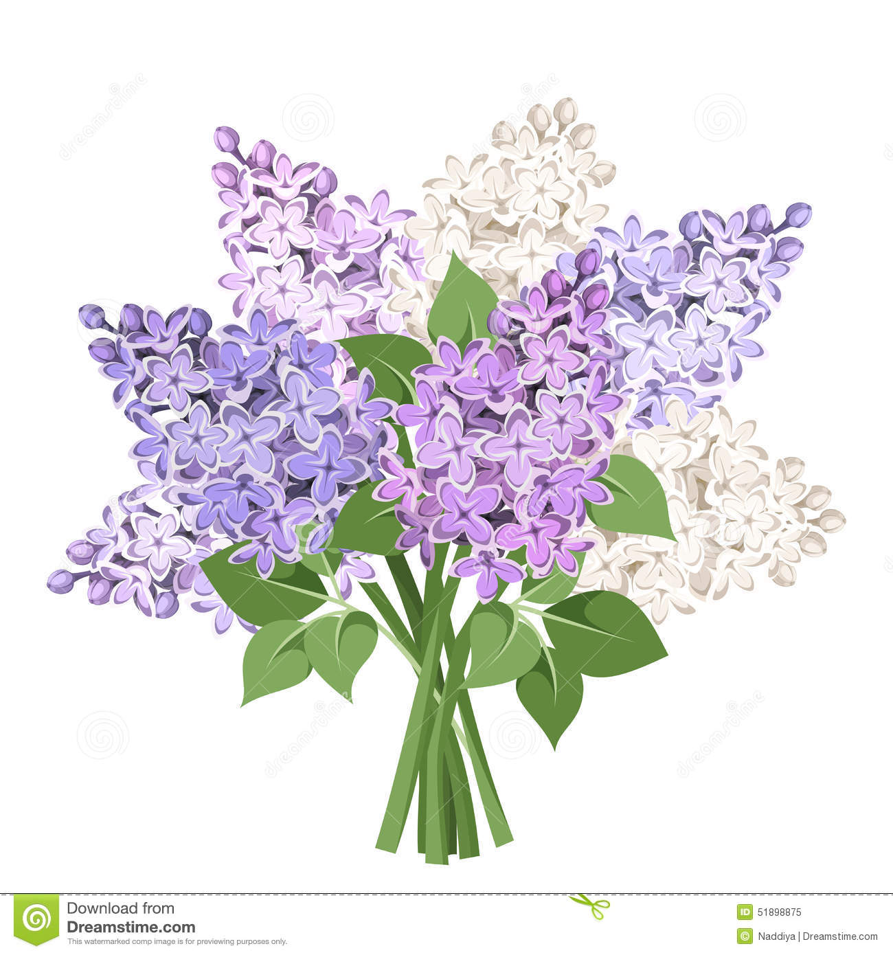 Bouquet Of Purple And White Lilac Flowers. Vector ...