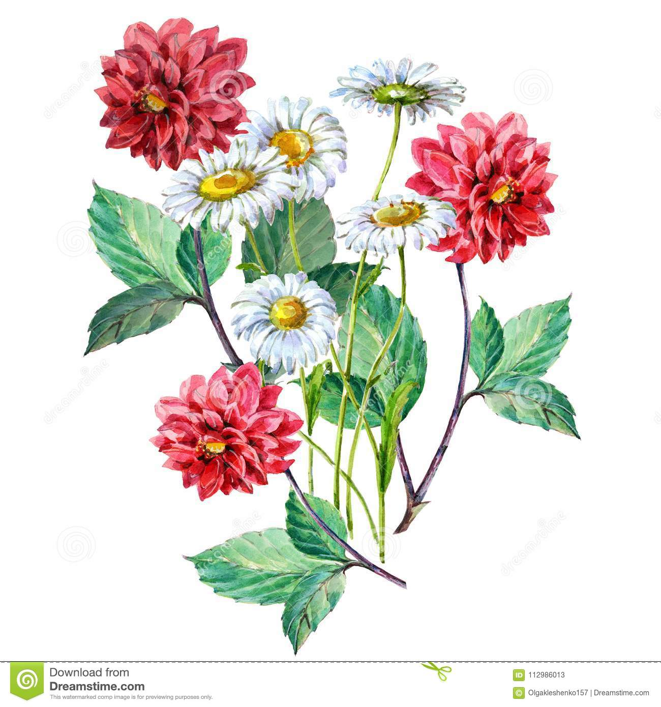 Bouquet Red Dahlia and White Chamomiles of Watercolor. Floral Illustration.