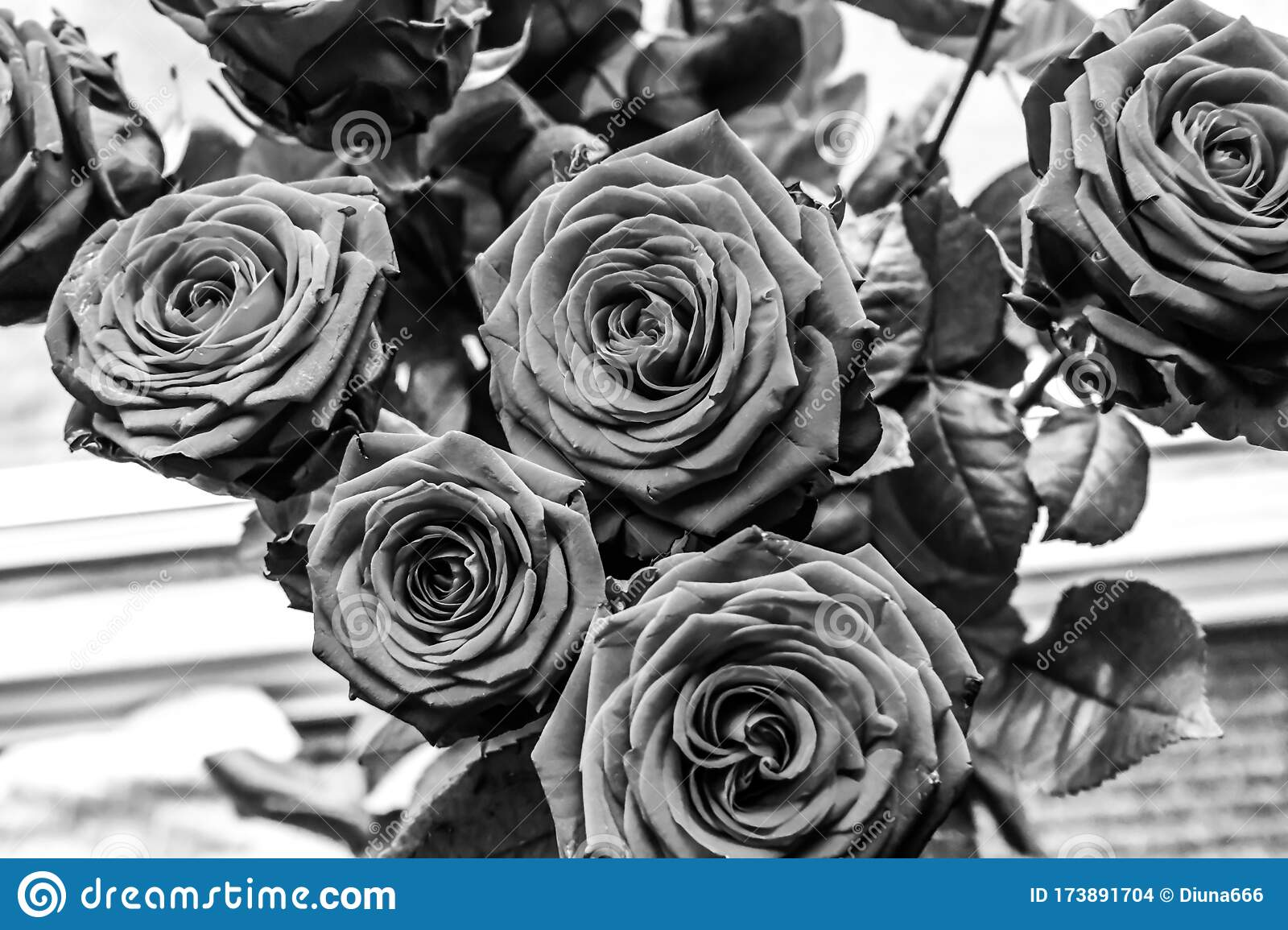 Bouquet Of Red Roses Black And White Picture Stock Photo Image Of Garden Roses 173891704