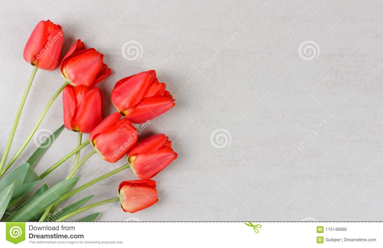 Bouquet of red tulips on grey background with copy space stock photo bouquet of red tulips on grey background with copy space mock up for birthday greetings womens day mothers day m4hsunfo