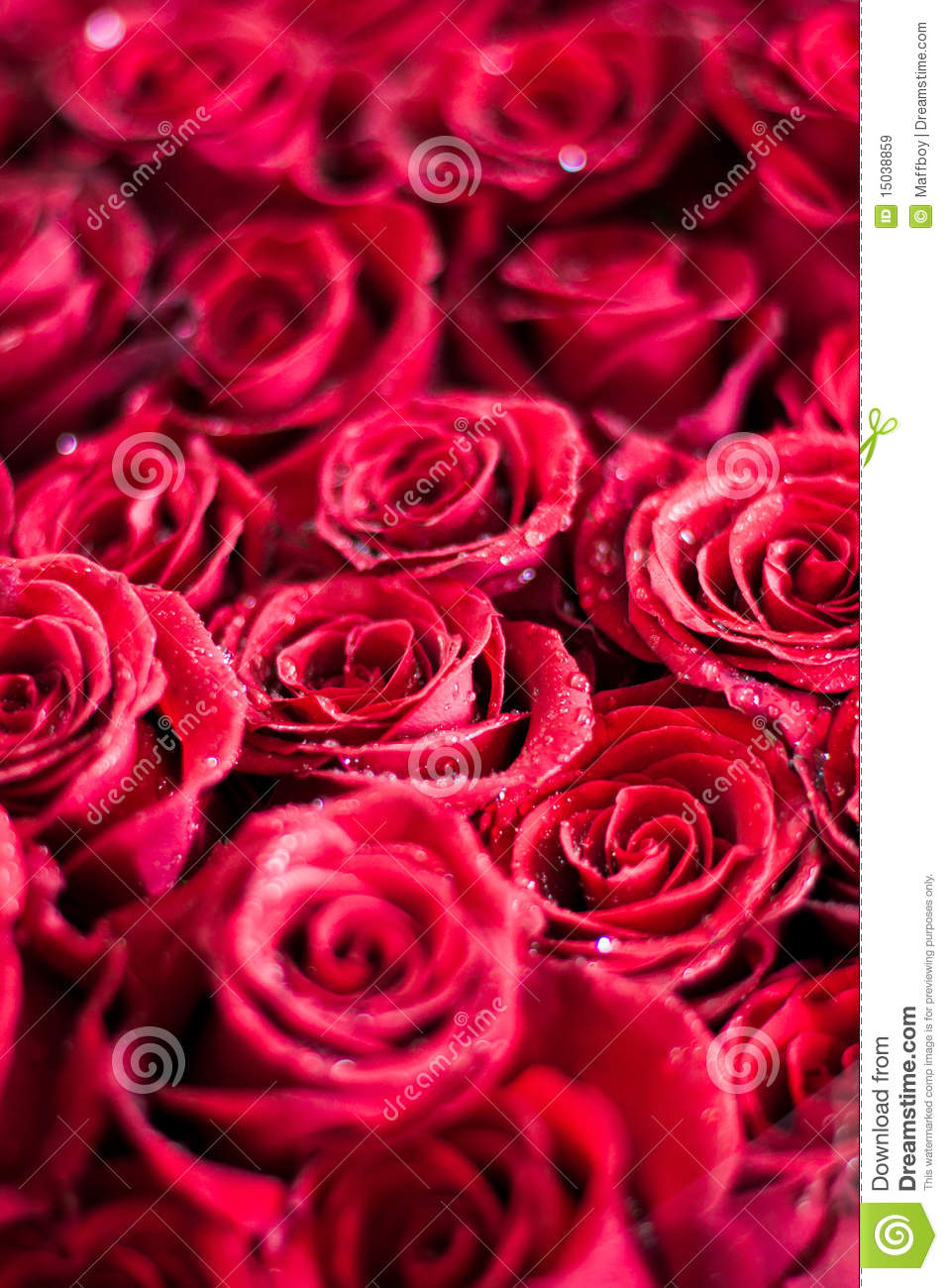 Bouquet of roses stock image image of garden natural 15038859 bouquet of roses izmirmasajfo Gallery