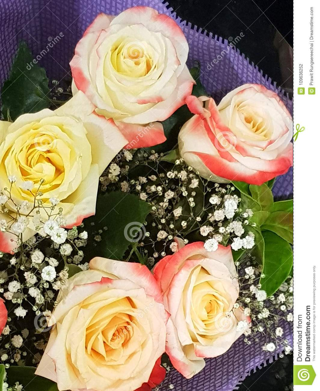 Bouquet Of Roses Stock Photo Image Of Color Rose Love 109636252