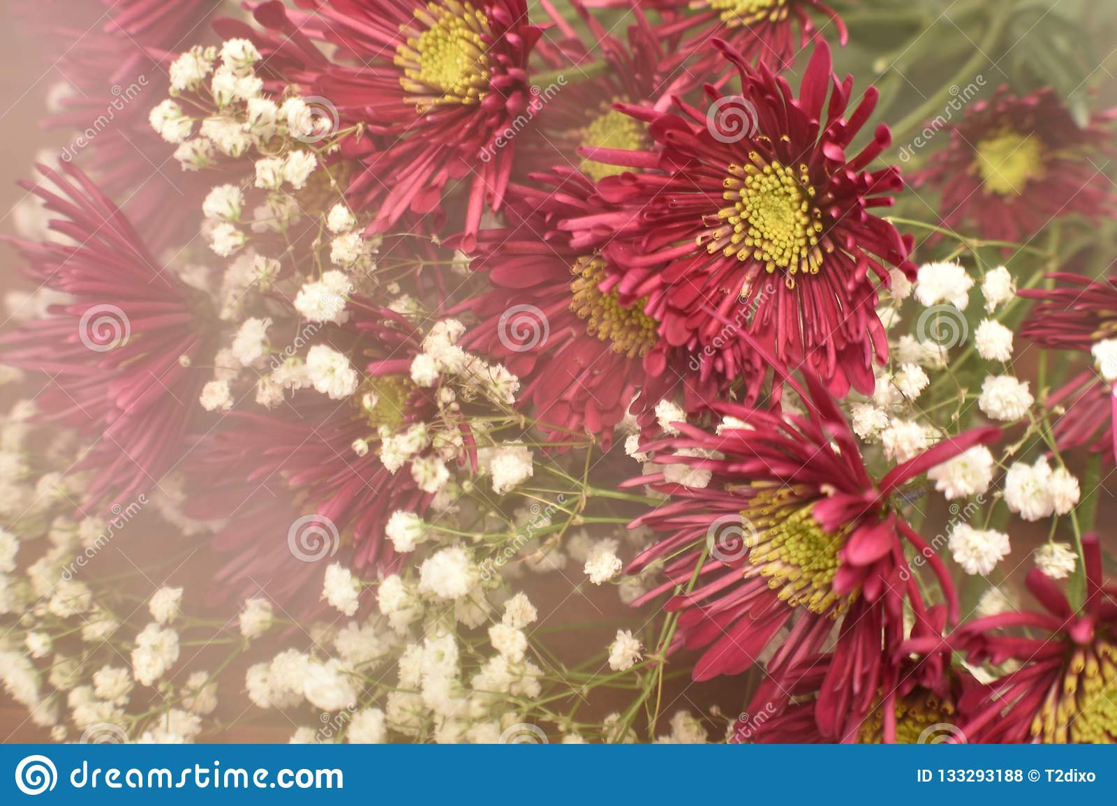 Bouquet Rouge D\'aster De Nouvelle Angleterre Photo stock - Image du ...