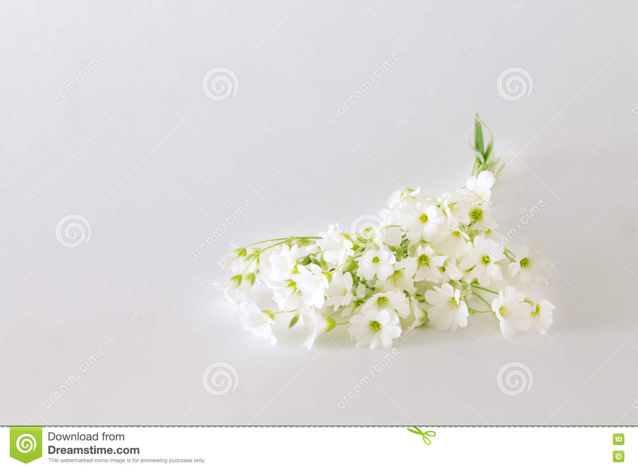 Bouquet Of Small White Flowers On A Light Background Stock Image ...