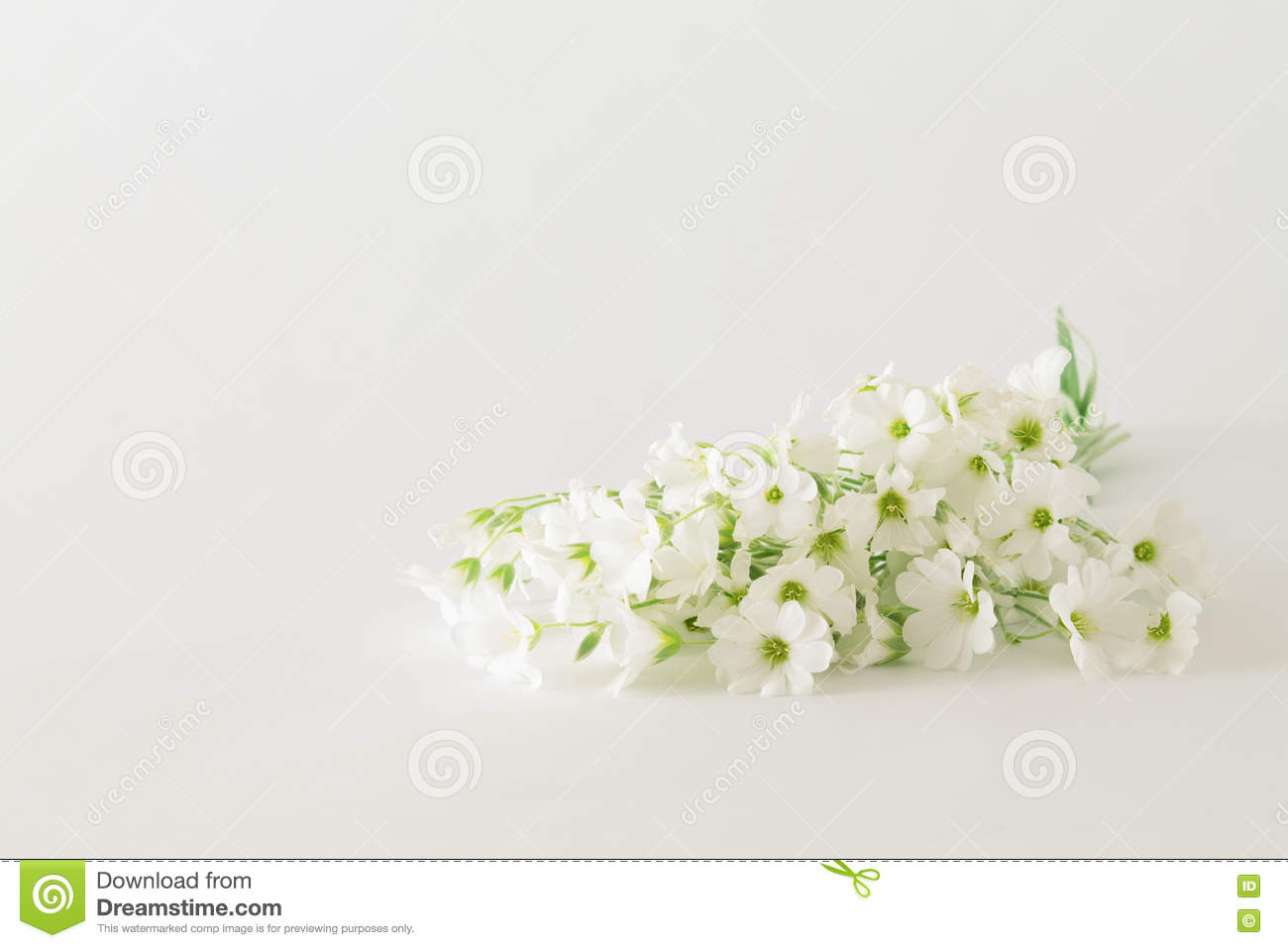 Bouquet of small white flowers on a white background stock photo download bouquet of small white flowers on a white background stock photo image of beautiful izmirmasajfo