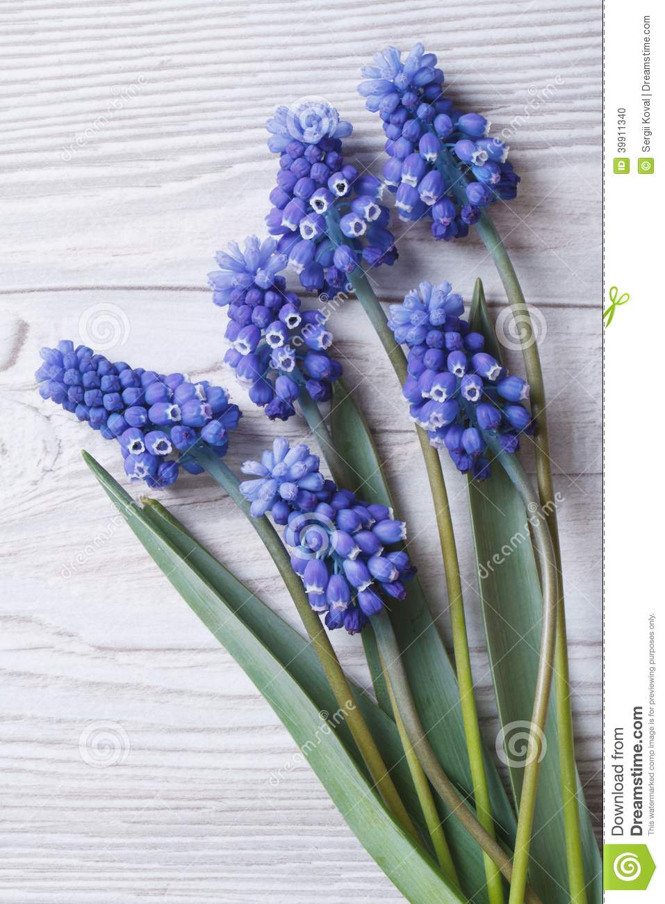 Bouquet Of Spring Flowers Muscari Blue Close Up Vertical